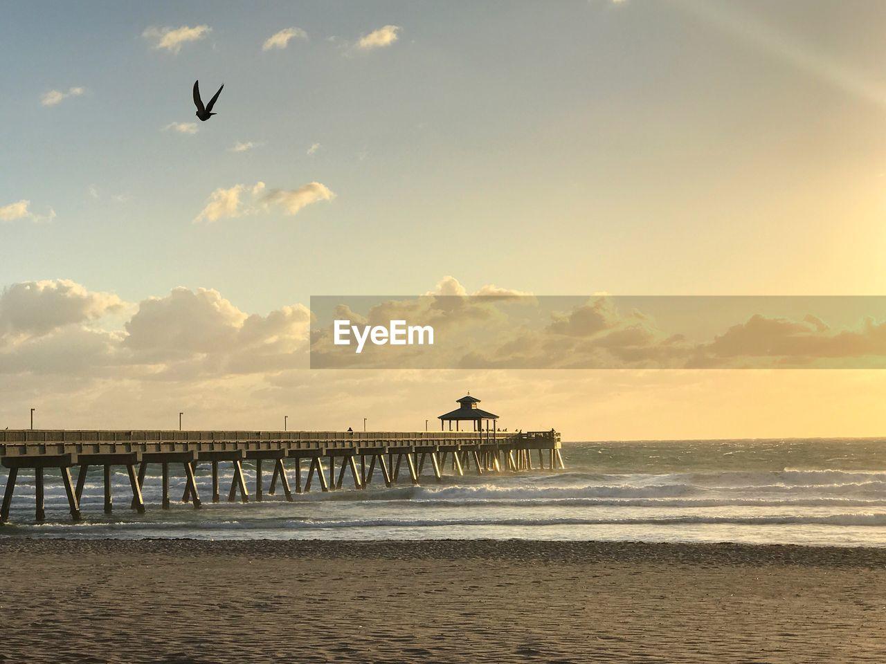 water, sky, sea, scenics - nature, sunset, horizon over water, horizon, bird, beauty in nature, animal themes, beach, vertebrate, cloud - sky, animal, land, tranquil scene, nature, built structure, architecture, outdoors