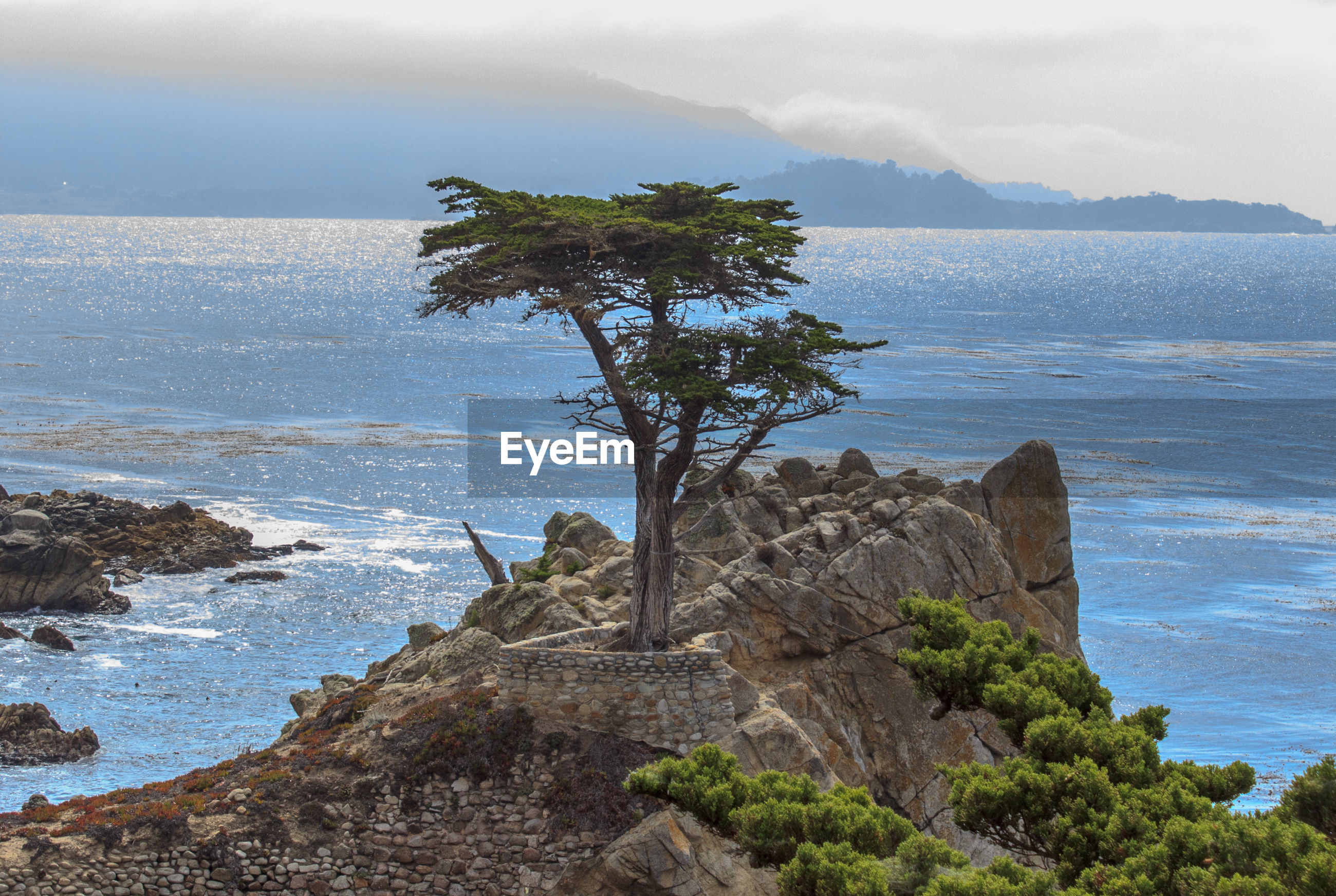 TREES ON CLIFF BY SEA AGAINST SKY
