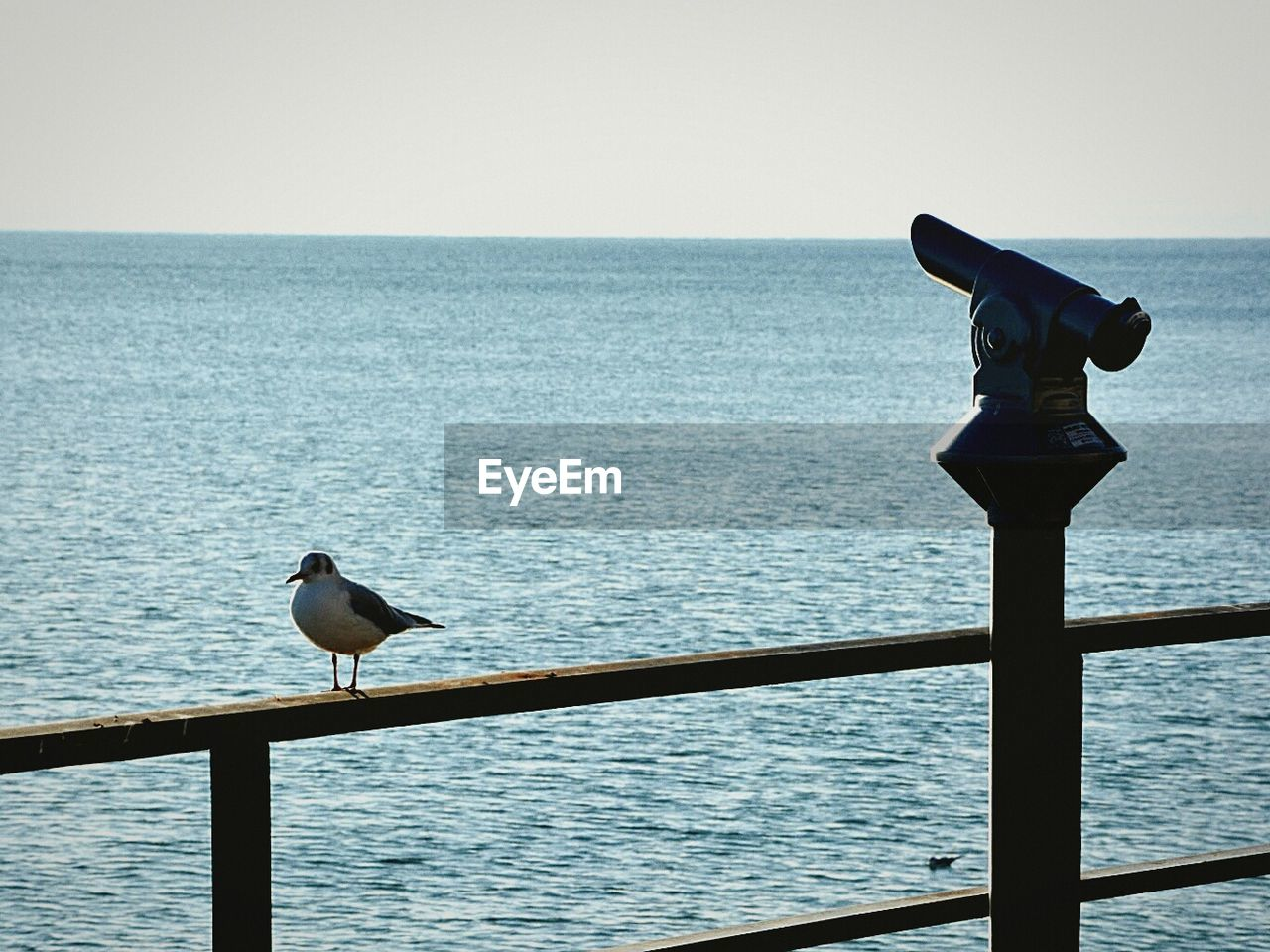 sea, water, horizon over water, clear sky, nature, railing, scenics, one animal, no people, beauty in nature, bird, outdoors, day, sky, animal themes, animals in the wild, coin-operated binoculars, perching, close-up
