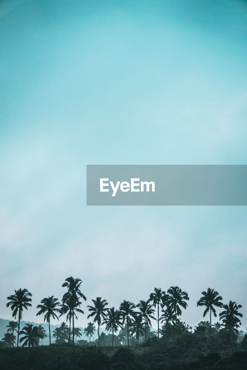 tree, palm tree, sky, tropical climate, plant, growth, nature, cloud - sky, beauty in nature, no people, tranquility, scenics - nature, day, tranquil scene, outdoors, land, copy space, coconut palm tree, environment, field, tropical tree, palm leaf