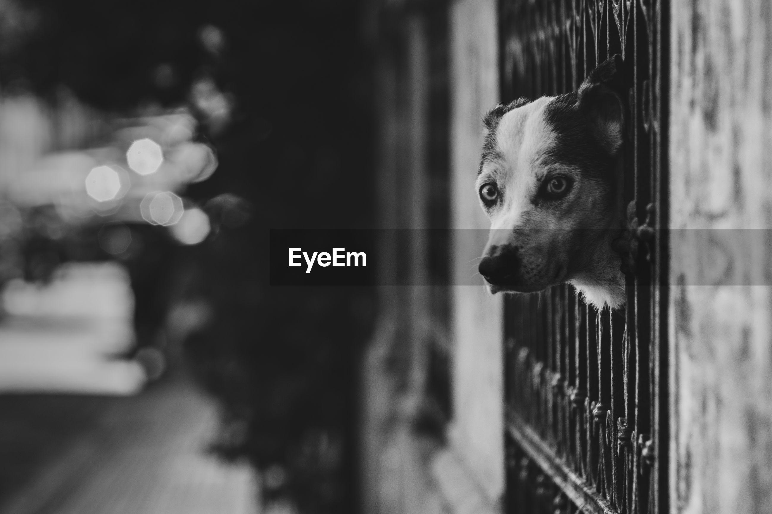 Dog peeping through railing