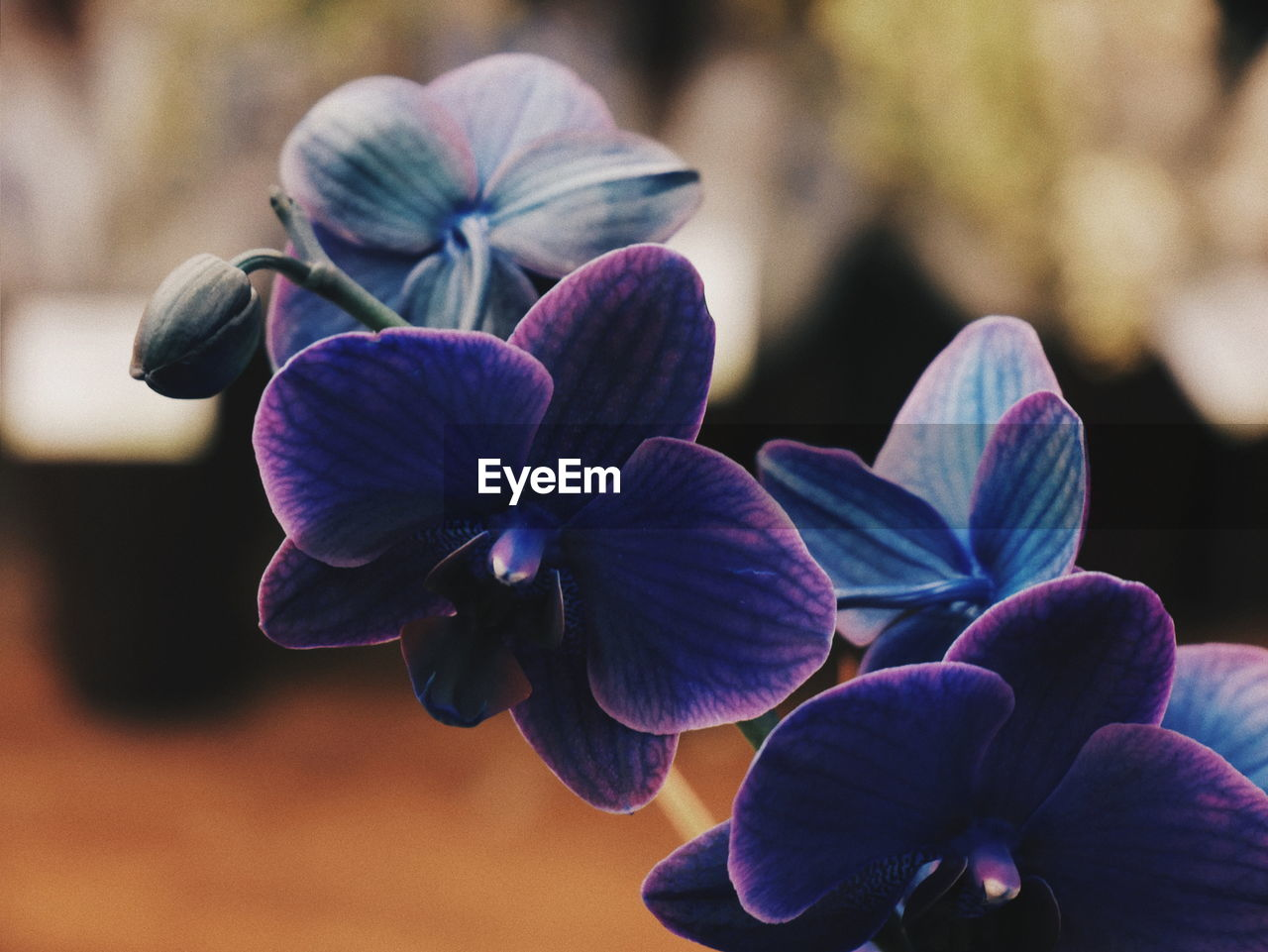flowering plant, flower, beauty in nature, freshness, fragility, plant, vulnerability, focus on foreground, close-up, petal, flower head, inflorescence, growth, day, nature, no people, purple, outdoors, park, park - man made space