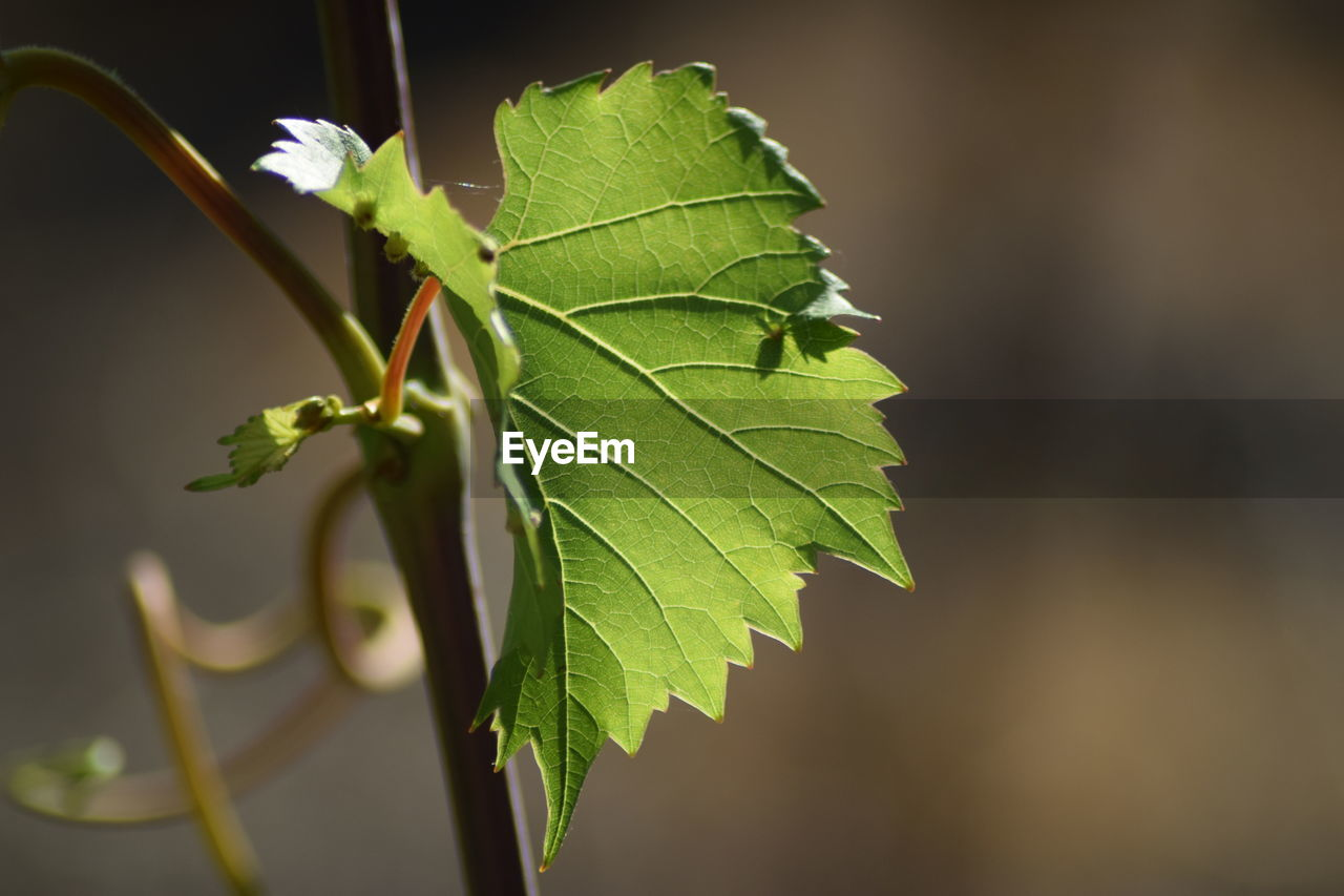 leaf, growth, nature, green color, focus on foreground, close-up, no people, plant, outdoors, day, beauty in nature, freshness