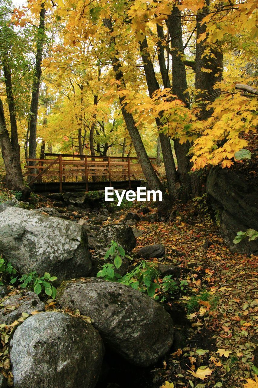 autumn, tree, outdoors, nature, tranquility, no people, leaf, day, tranquil scene, growth, beauty in nature, scenics
