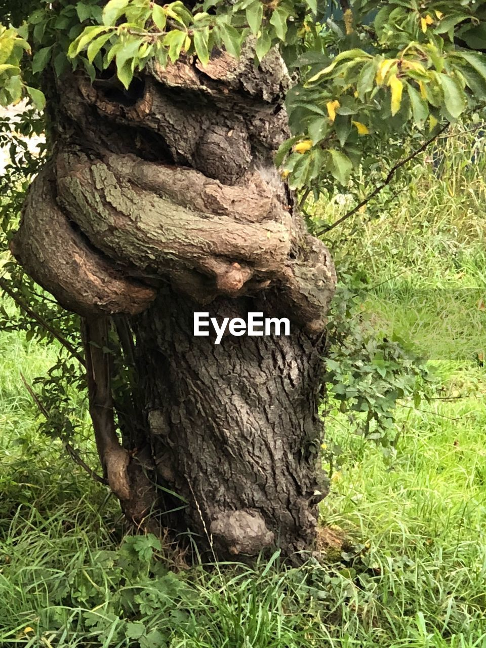 plant, tree, growth, tree trunk, day, trunk, nature, land, no people, green color, outdoors, grass, bark, close-up, tranquility, field, plant part, forest, textured, beauty in nature