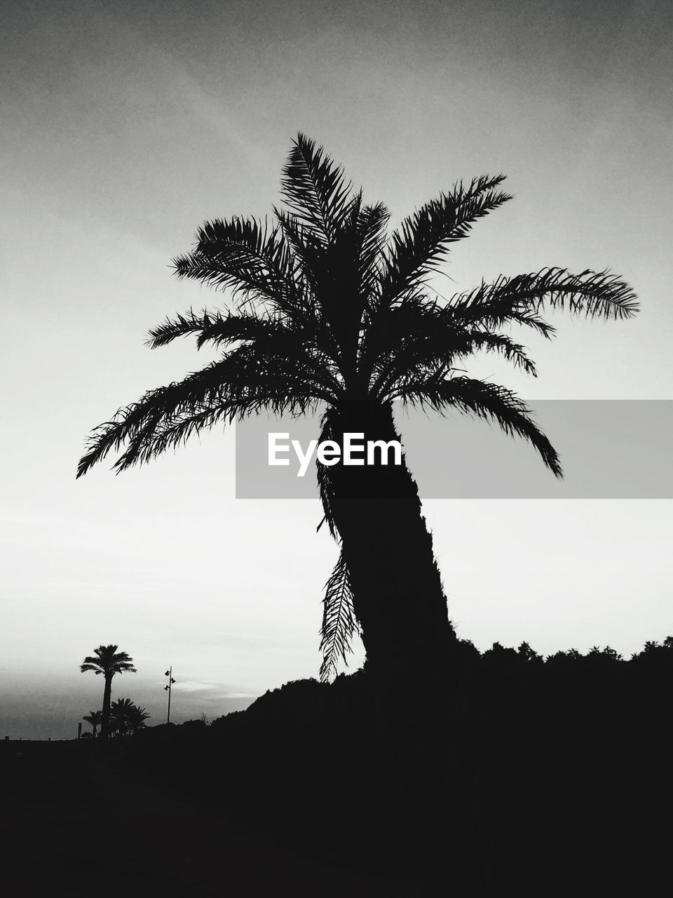palm tree, tree, silhouette, growth, beauty in nature, tranquil scene, tranquility, scenics, nature, tree trunk, no people, outdoors, low angle view, landscape, sky, day, clear sky