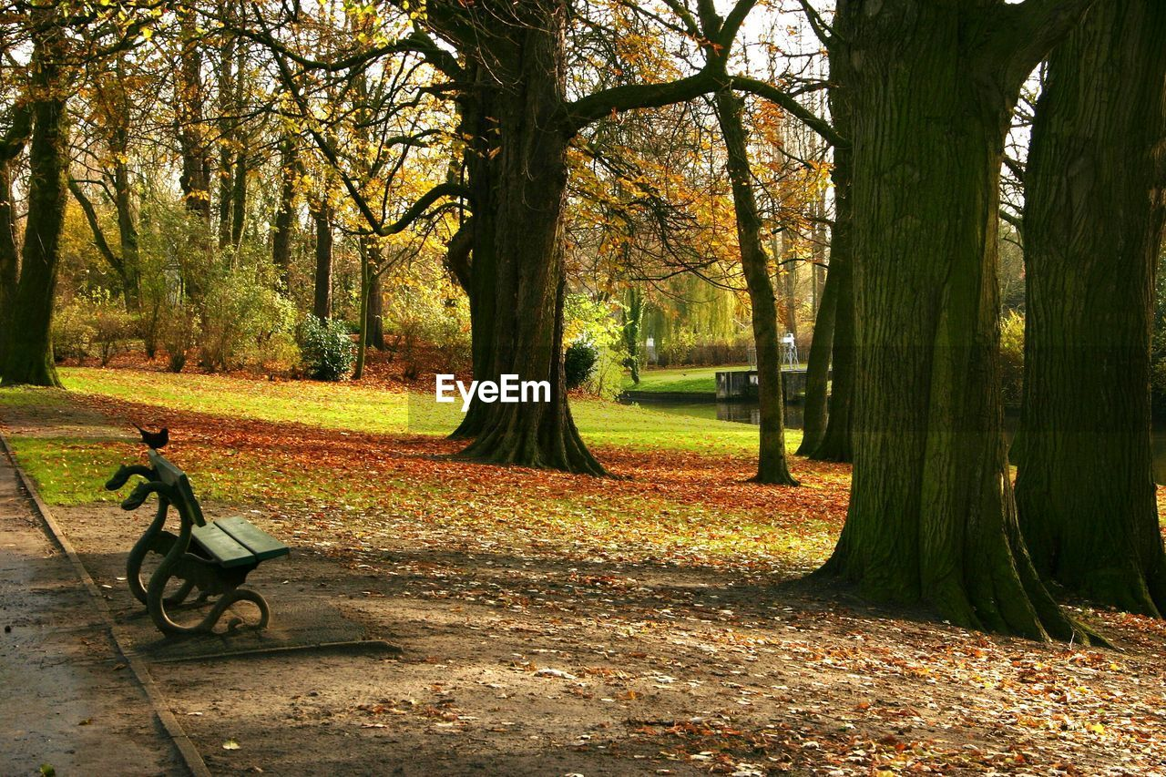 bicycle, tree, autumn, transportation, nature, growth, park - man made space, outdoors, day, no people, grass