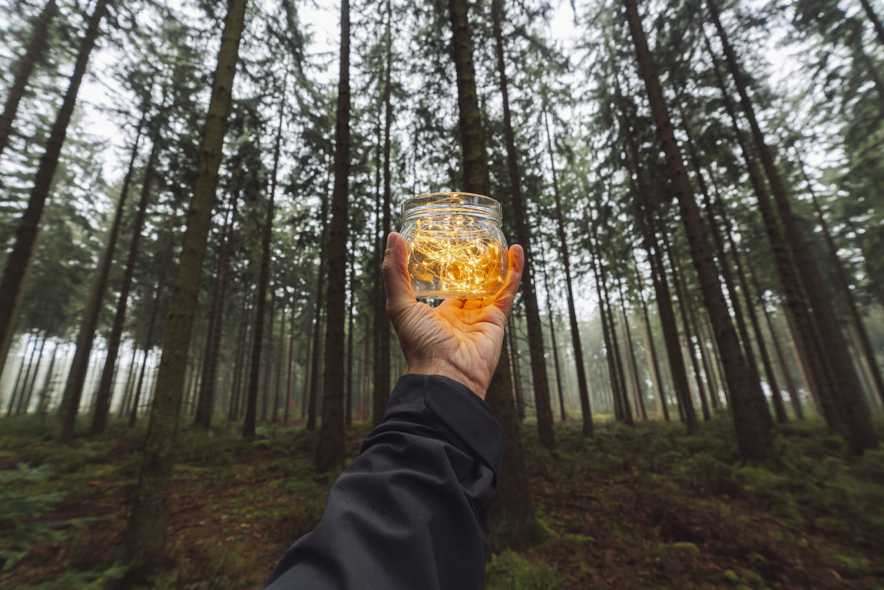 forest, tree, one person, human hand, human body part, holding, land, plant, woodland, hand, real people, lifestyles, food and drink, leisure activity, unrecognizable person, nature, personal perspective, drink, body part, outdoors, glass, finger