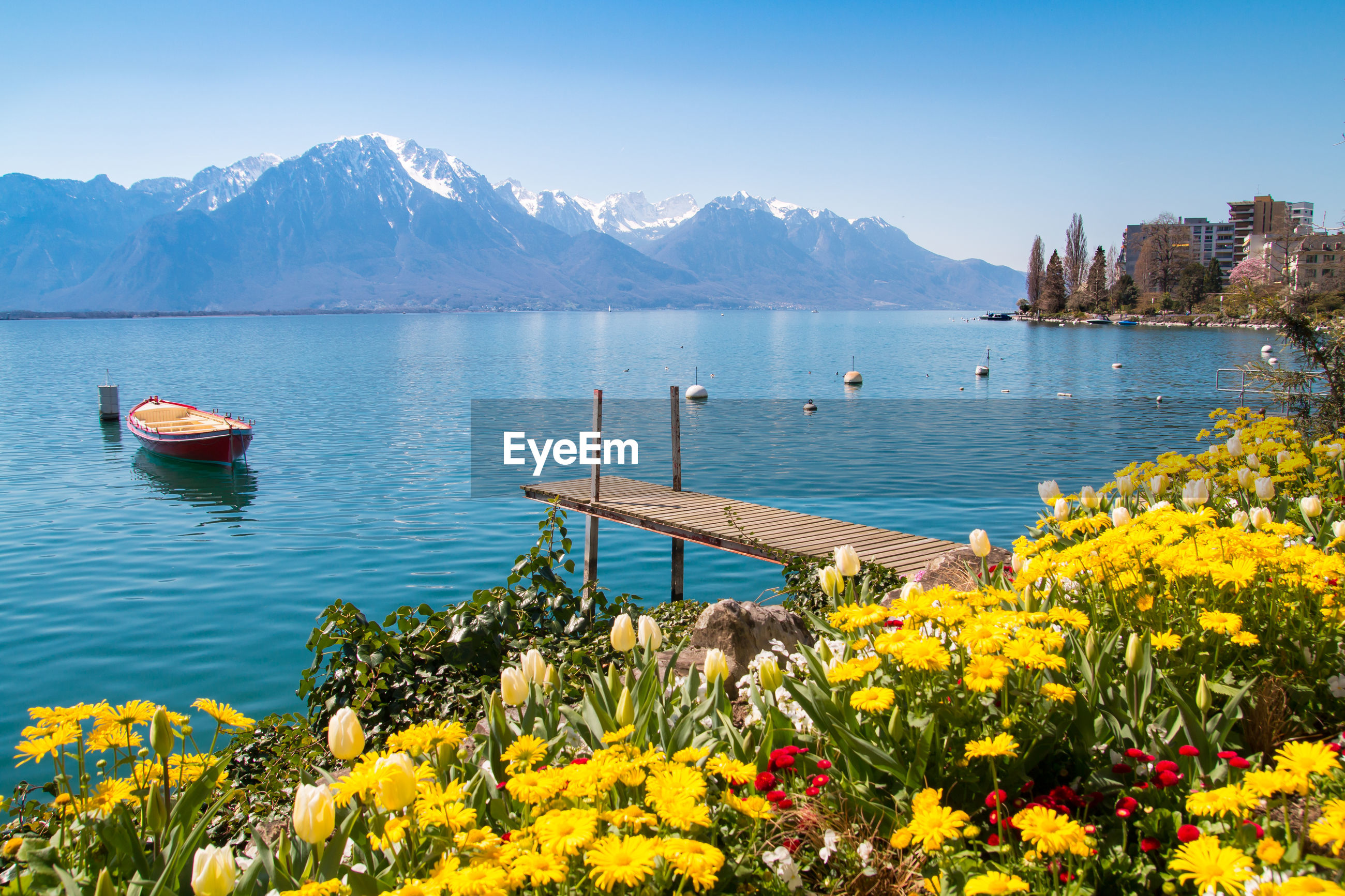 SCENIC VIEW OF YELLOW FLOWERS BY LAKE AGAINST MOUNTAINS