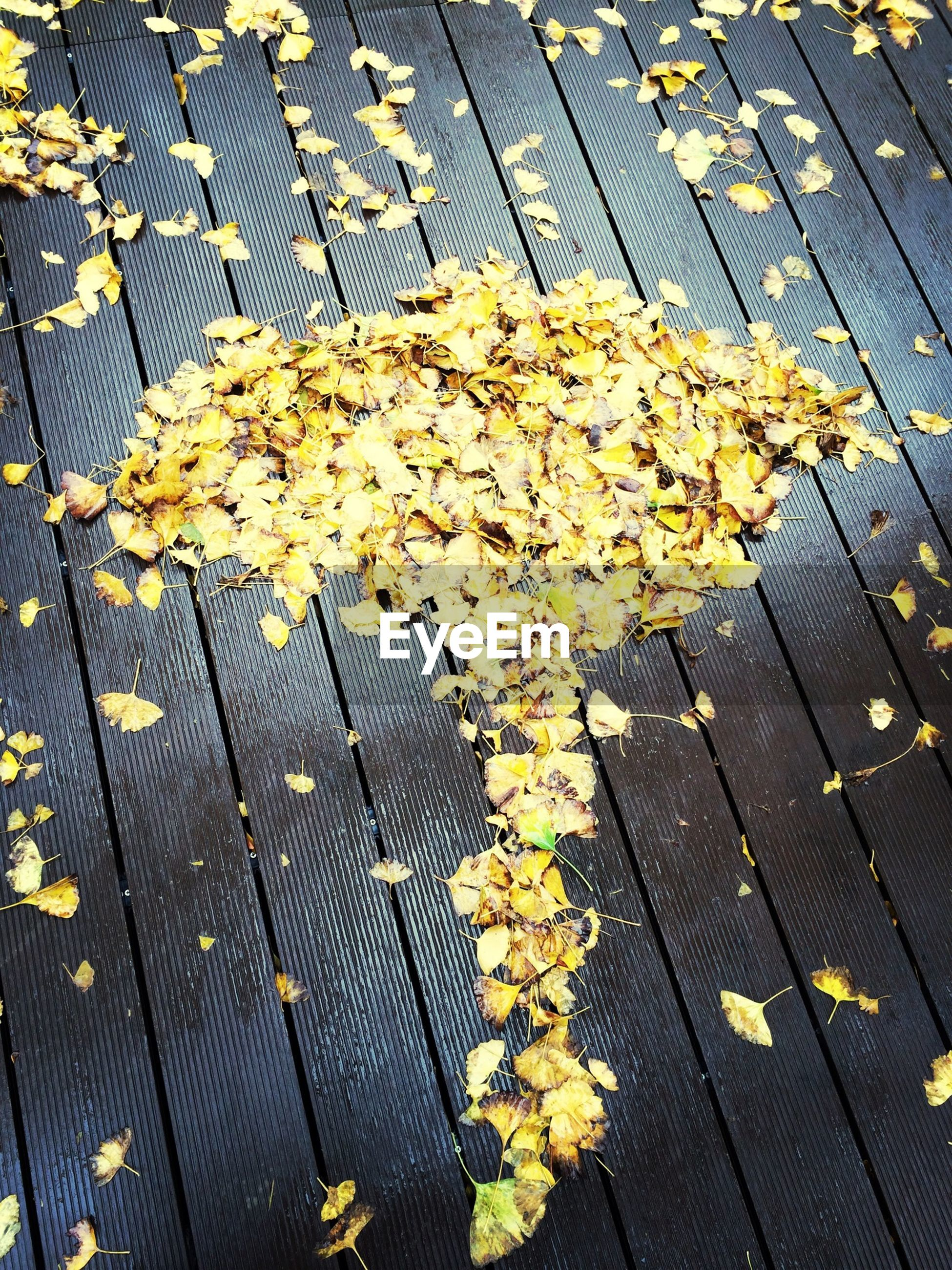 high angle view, flower, yellow, leaf, autumn, dry, fragility, season, fallen, directly above, abundance, petal, day, nature, outdoors, freshness, change, plant, sunlight, fence