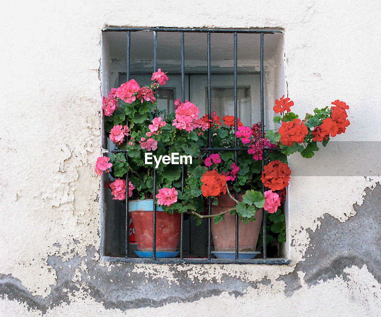 flower, architecture, window, building exterior, plant, fragility, window box, pink color, growth, built structure, outdoors, day, no people, nature, blooming, beauty in nature, freshness, flower head
