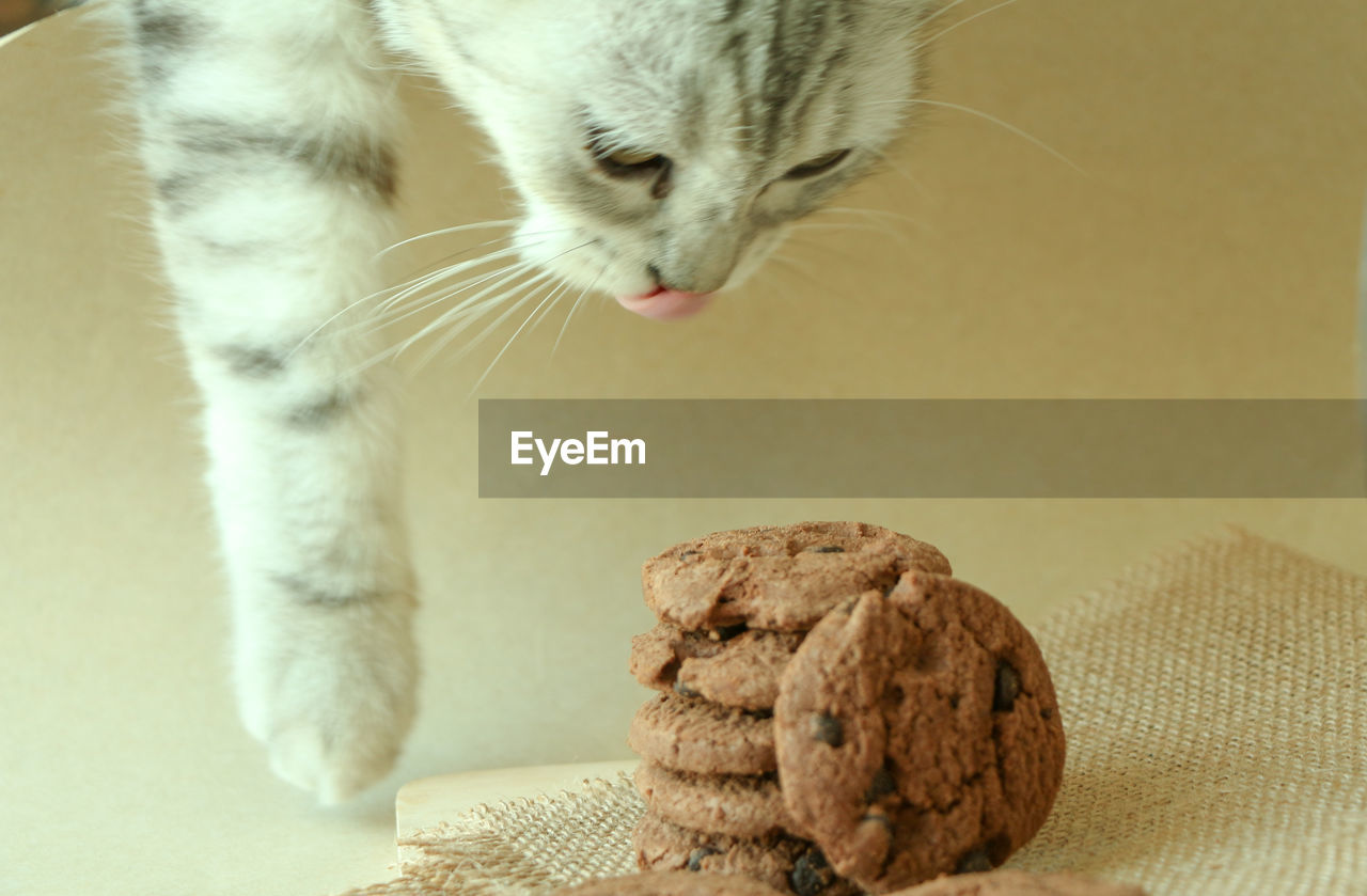 animal themes, one animal, animal, mammal, cat, feline, domestic cat, pets, domestic, domestic animals, vertebrate, no people, indoors, close-up, focus on foreground, food, food and drink, animal body part, table, whisker