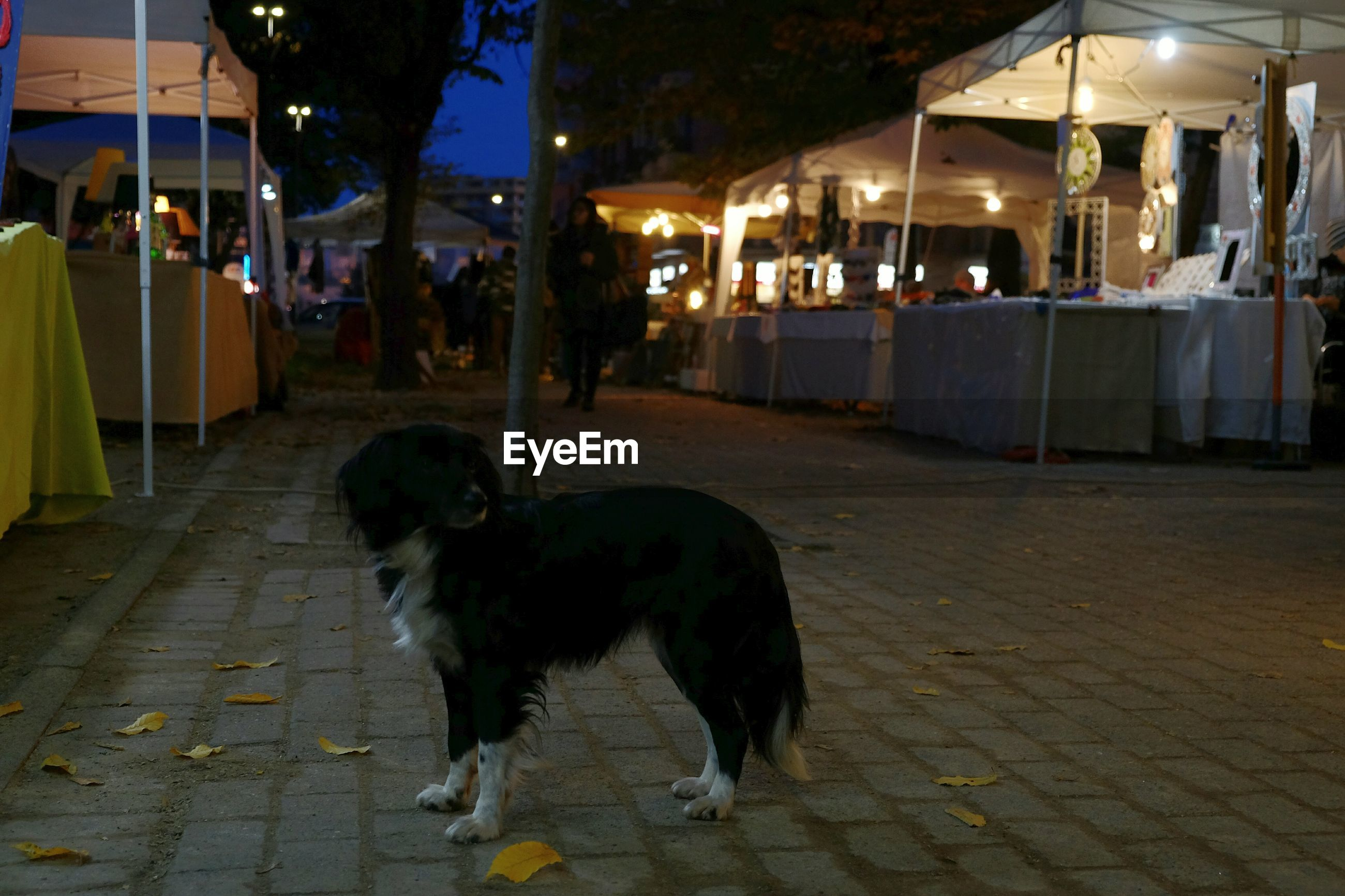 DOG AT SIDEWALK
