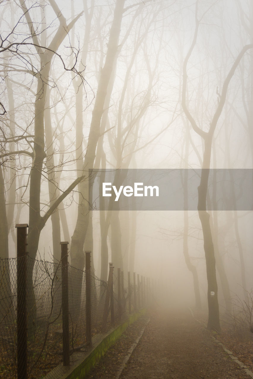 fog, foggy, bare tree, mist, tranquility, tree, nature, tranquil scene, beauty in nature, hazy, branch, outdoors, landscape, no people, day, tree trunk, cold temperature, sky