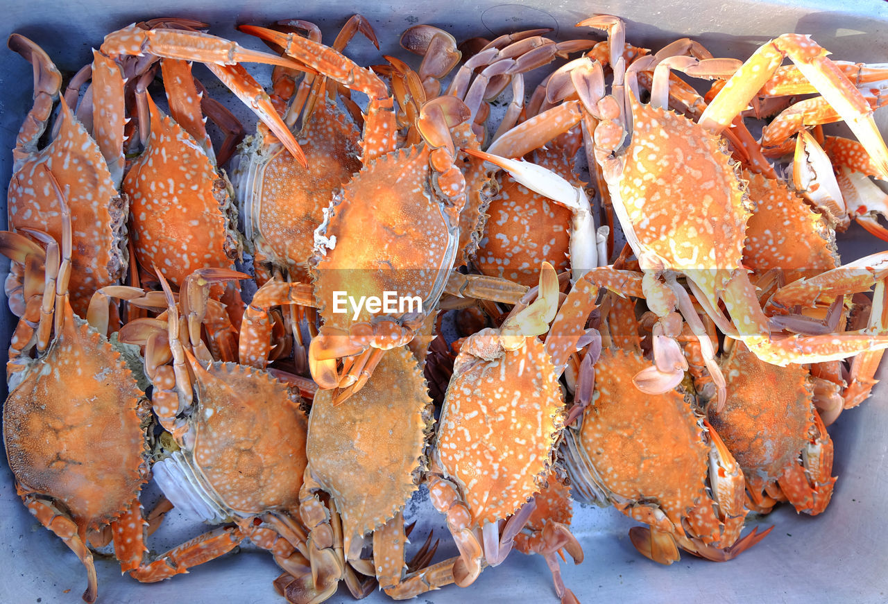 seafood, food and drink, food, freshness, no people, close-up, wellbeing, crustacean, healthy eating, crab, high angle view, still life, orange color, market, animal, retail, for sale, fish, raw food, fish market