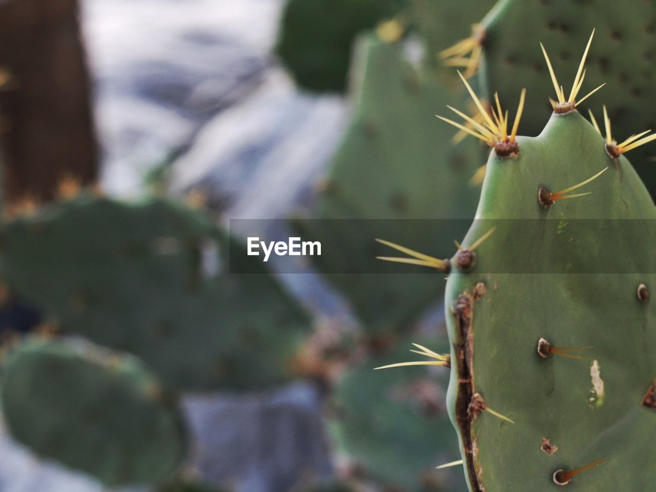 cactus, thorn, spiked, green color, growth, nature, focus on foreground, prickly pear cactus, plant, close-up, day, outdoors, no people, beauty in nature