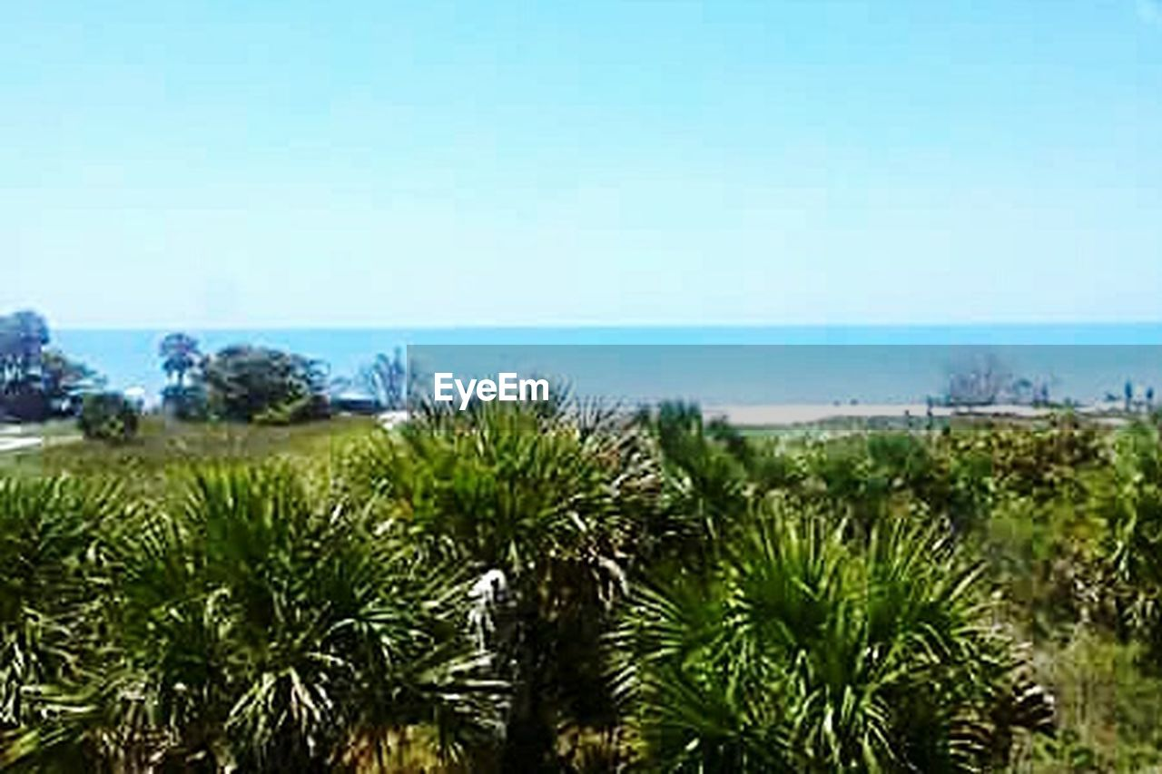 sea, clear sky, horizon over water, scenics, nature, green color, blue, sky, no people, day, tranquil scene, beach, tranquility, beauty in nature, water, horizon, outdoors, close-up, tree