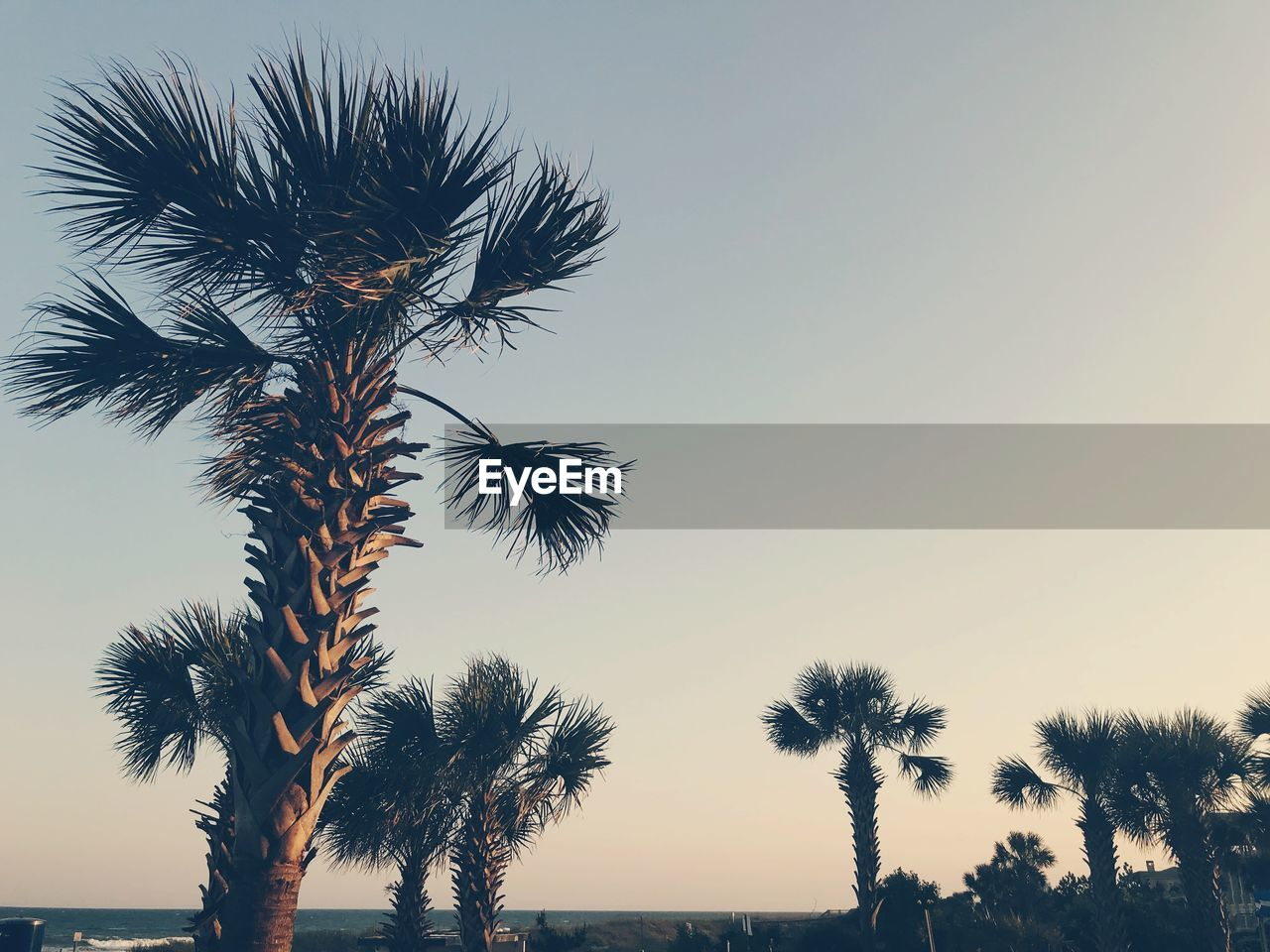 sky, tree, plant, palm tree, tropical climate, tranquility, beauty in nature, sunset, growth, scenics - nature, no people, nature, tranquil scene, trunk, clear sky, tree trunk, low angle view, silhouette, copy space, outdoors, coconut palm tree, tropical tree, palm leaf
