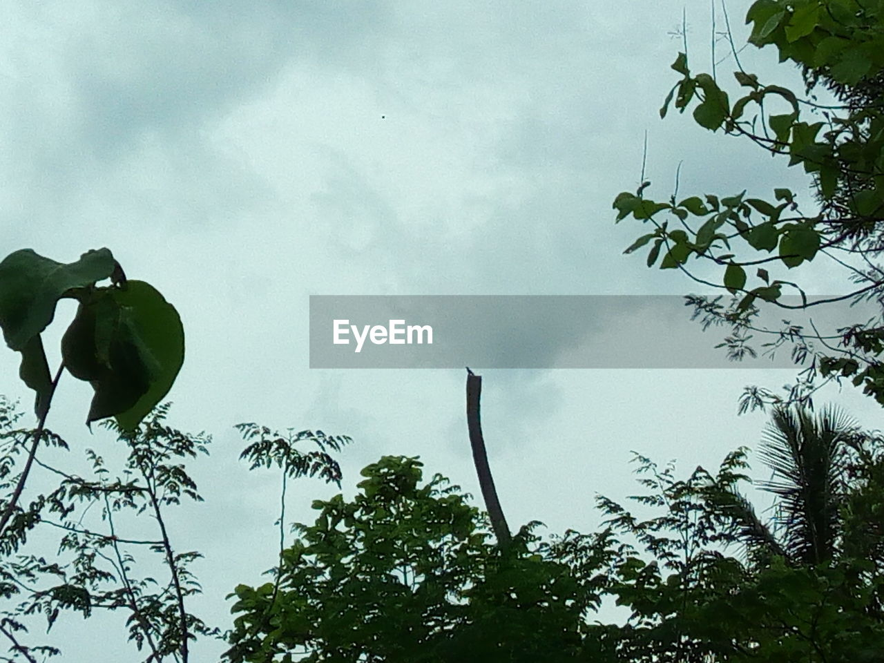 low angle view, tree, sky, leaf, cloud - sky, day, growth, no people, outdoors, branch, nature, beauty in nature