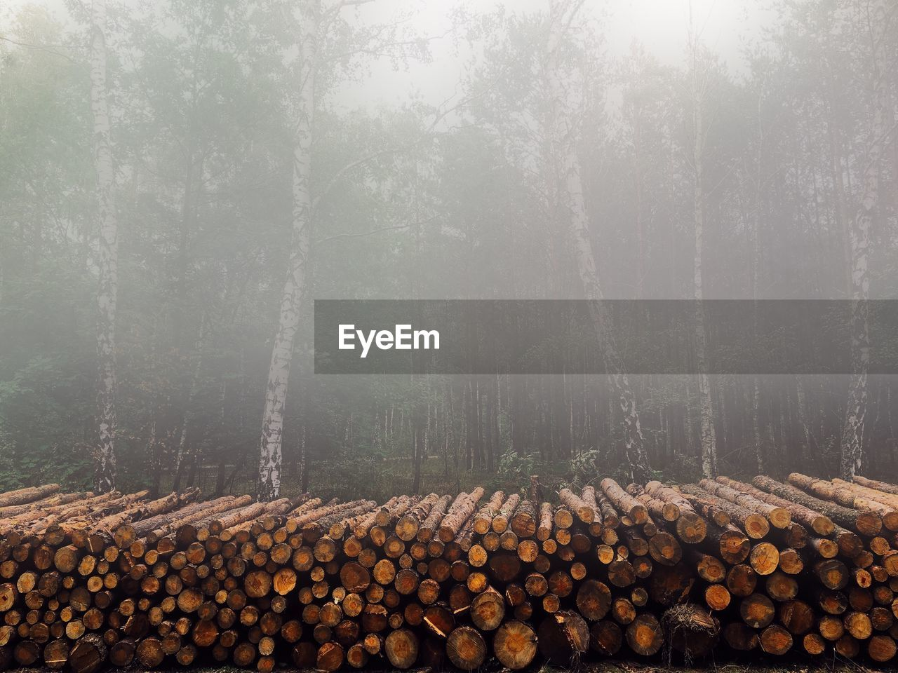 Stack Of Firewood Against Blurred Trees