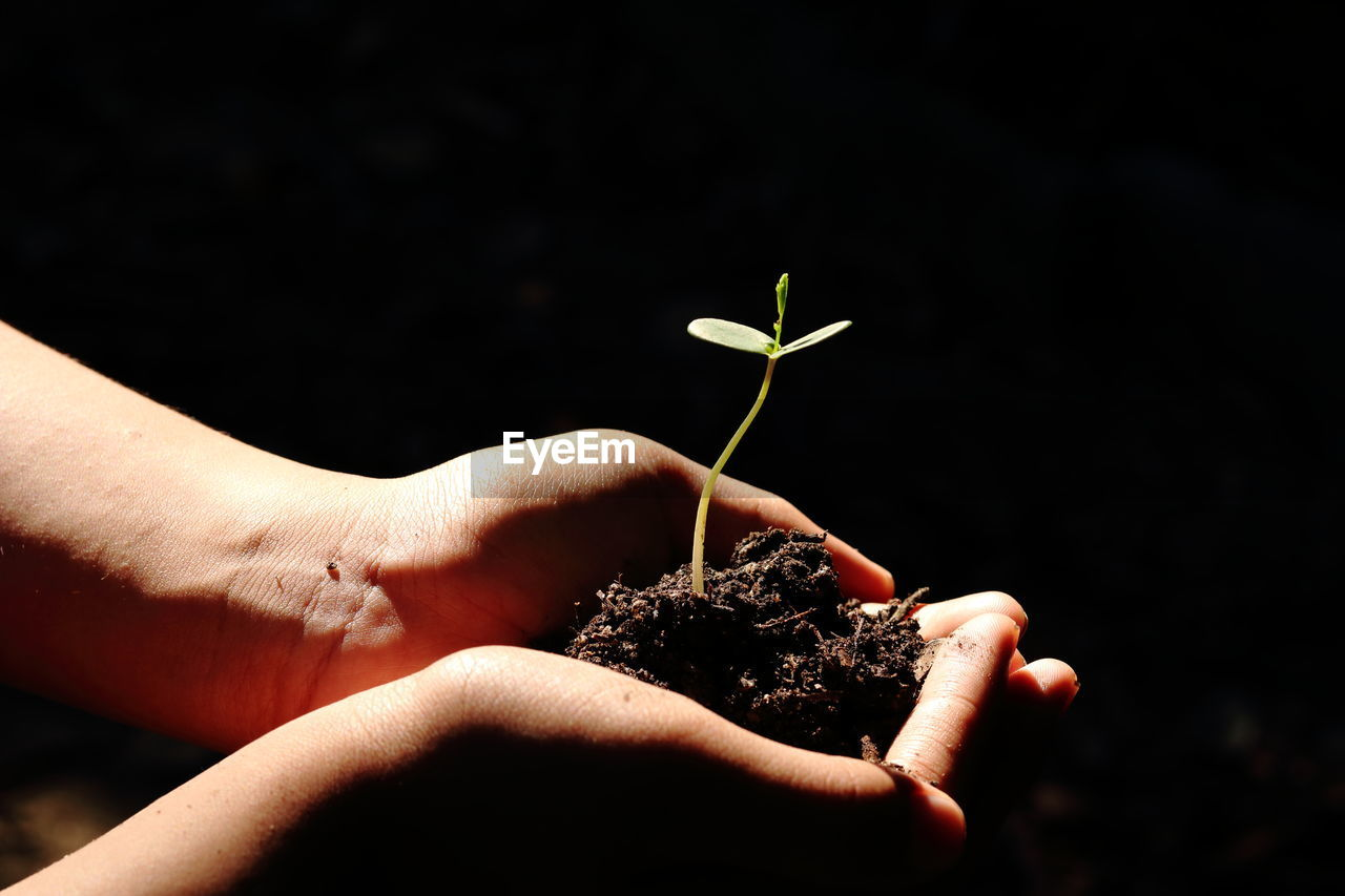 Close-up of cropped hands holding seedling