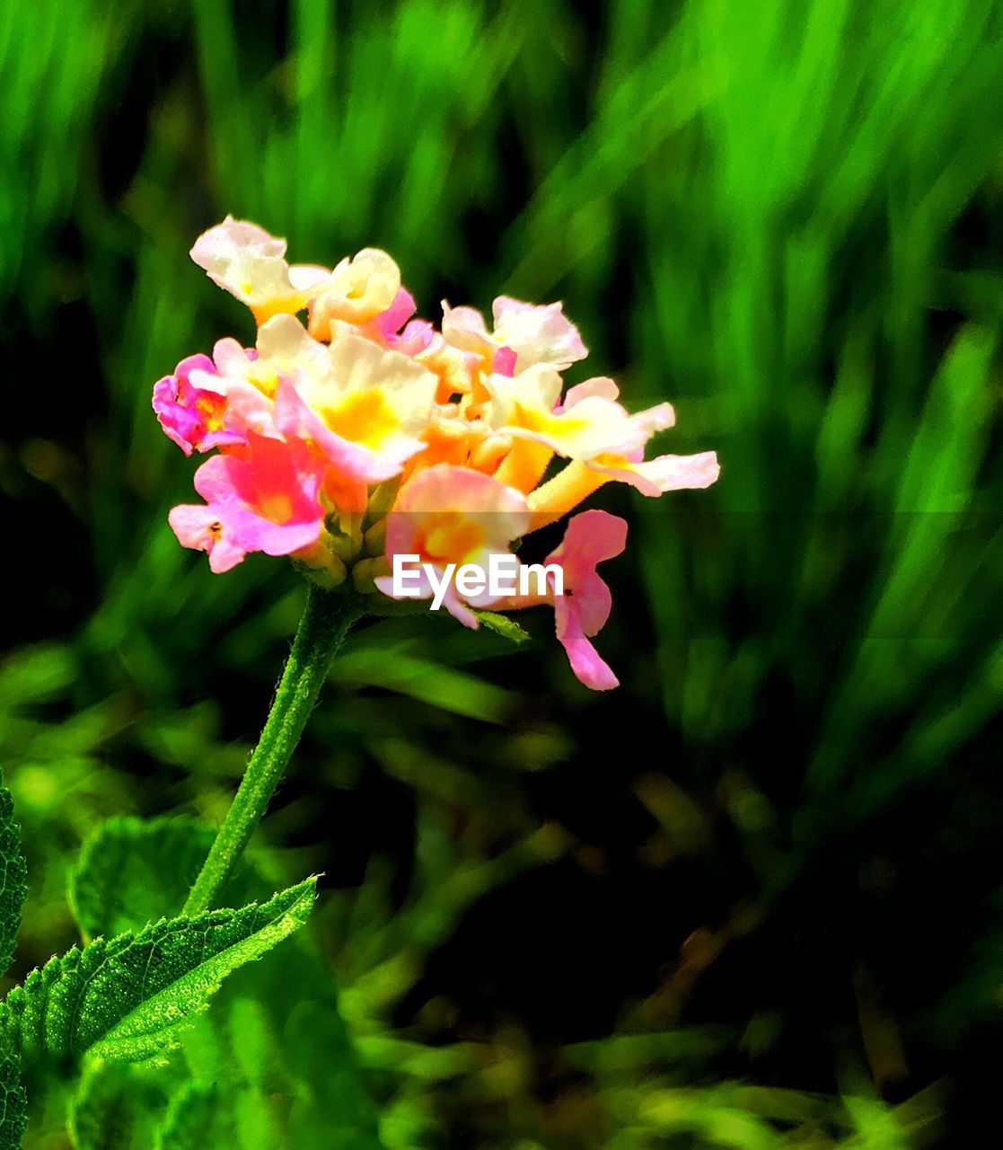 flower, growth, petal, beauty in nature, nature, plant, fragility, flower head, freshness, blooming, focus on foreground, park - man made space, green color, no people, close-up, outdoors, day