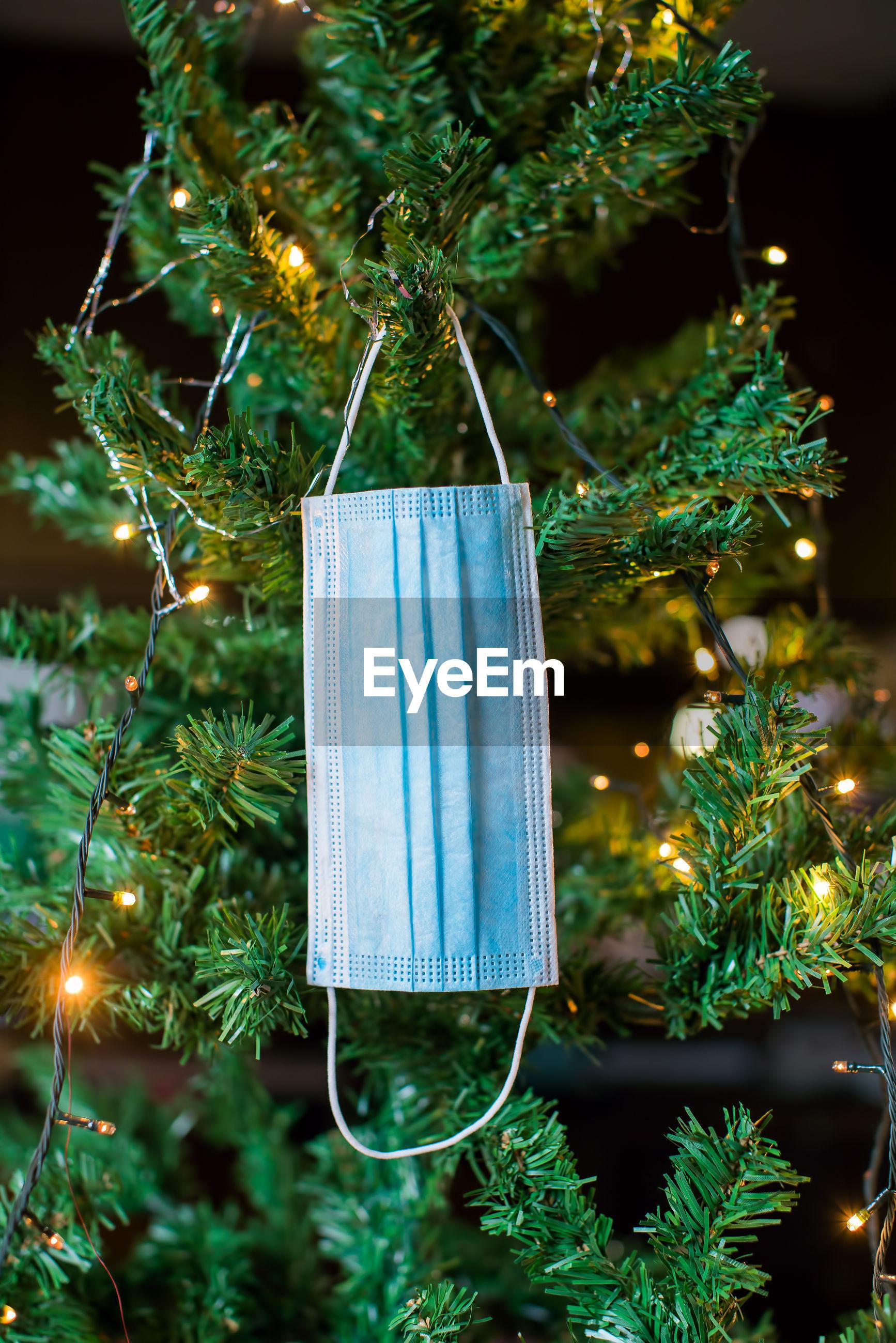 CLOSE-UP OF ILLUMINATED CHRISTMAS TREE BY PLANT