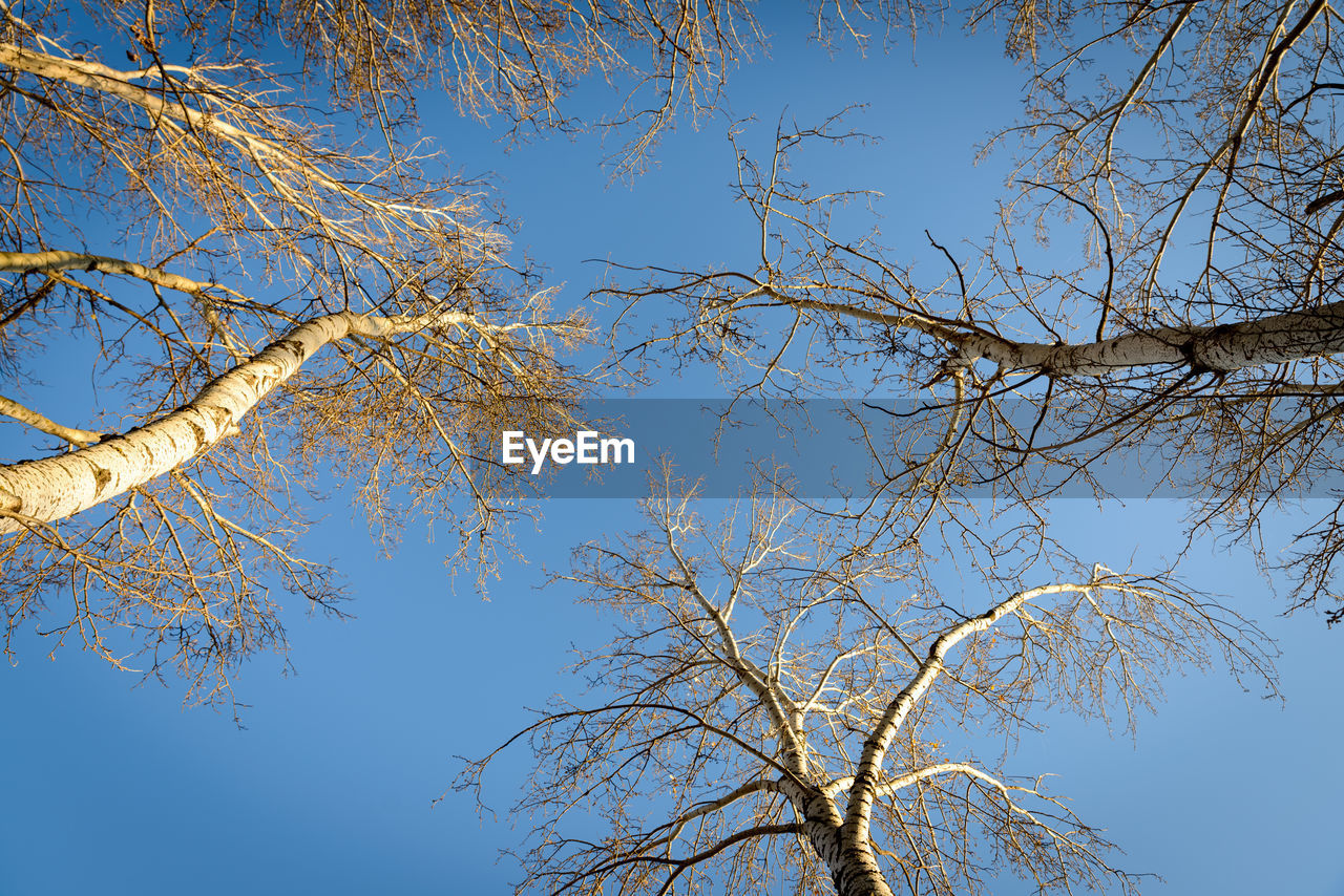 tree, branch, low angle view, nature, day, beauty in nature, bare tree, outdoors, growth, sky, blue, no people, clear sky