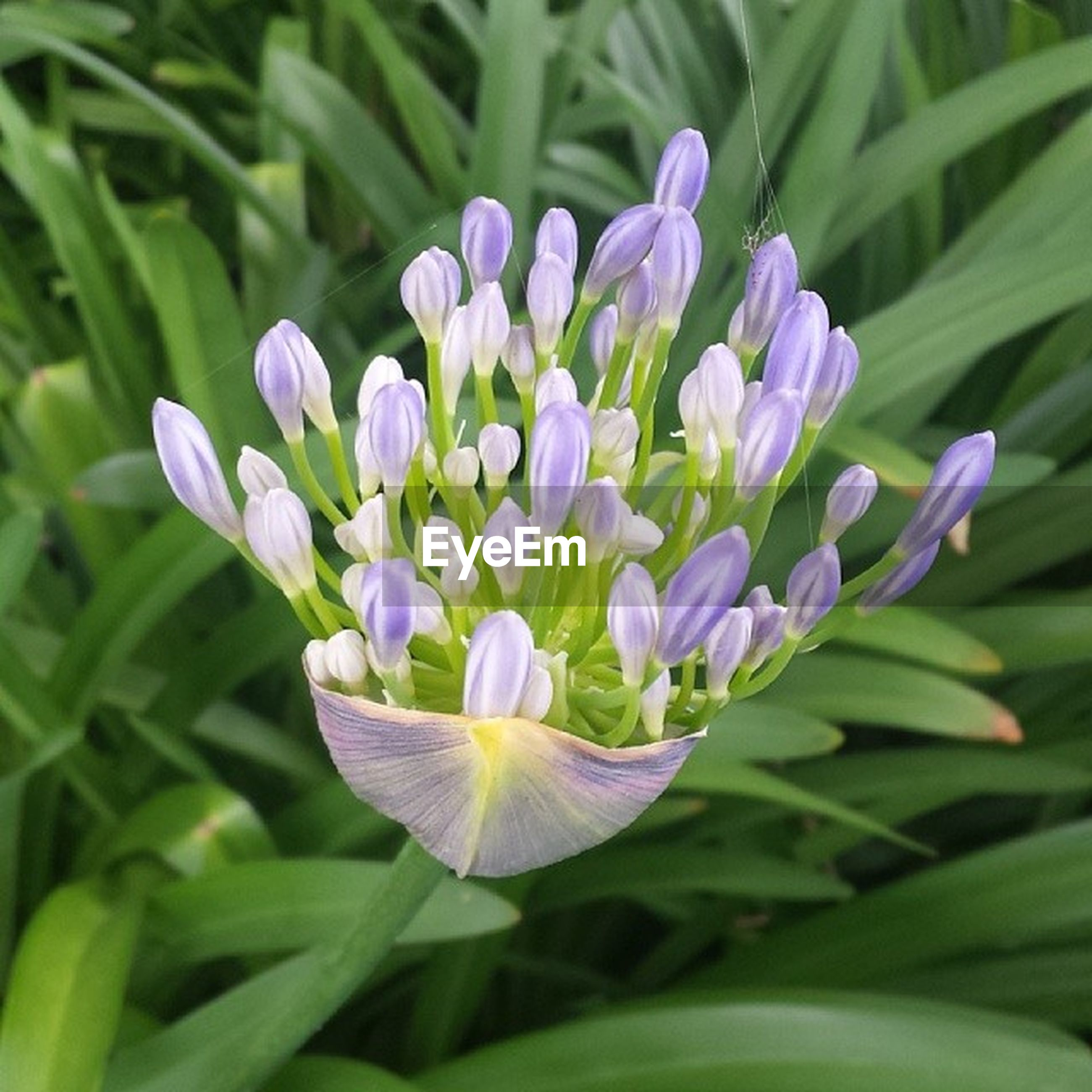 flower, freshness, petal, purple, fragility, growth, beauty in nature, flower head, plant, blooming, nature, close-up, leaf, in bloom, green color, focus on foreground, blue, stem, blossom, field