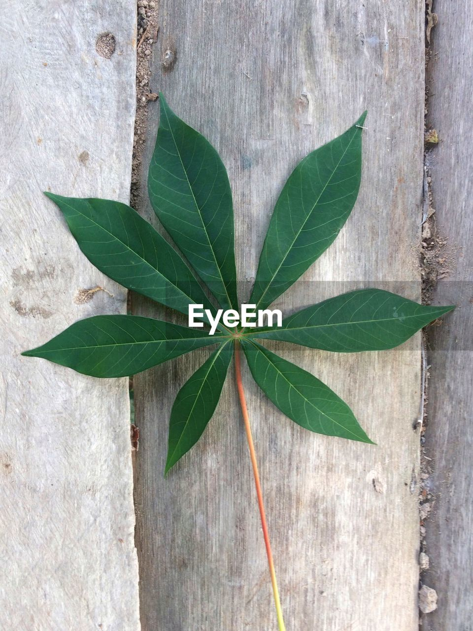 leaf, plant part, green color, close-up, directly above, nature, plant, no people, wood - material, day, outdoors, high angle view, growth, beauty in nature, vulnerability, leaf vein, herb, pattern, fragility, wall - building feature, leaves, concrete
