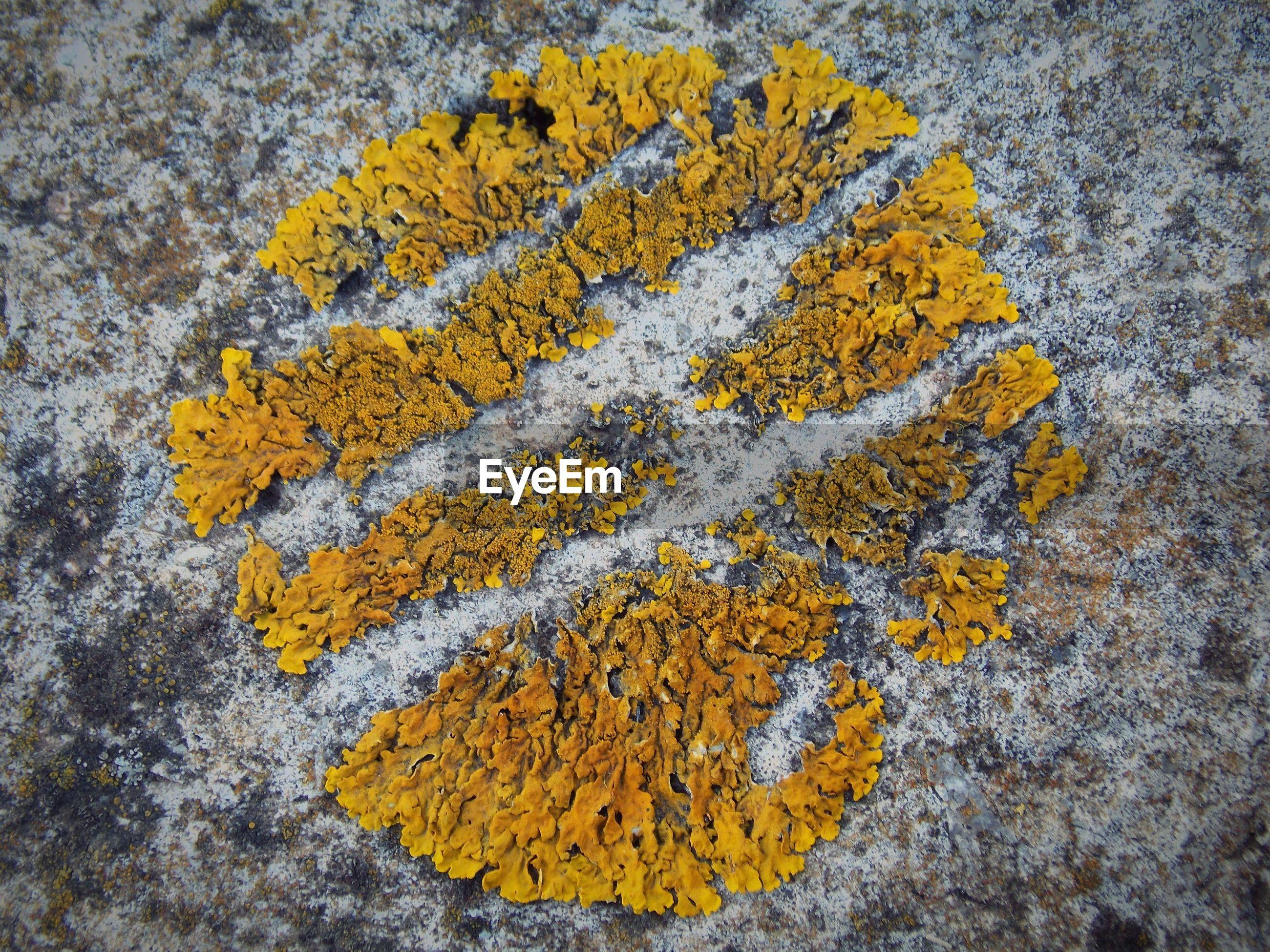 Close-up of yellow petals on rock