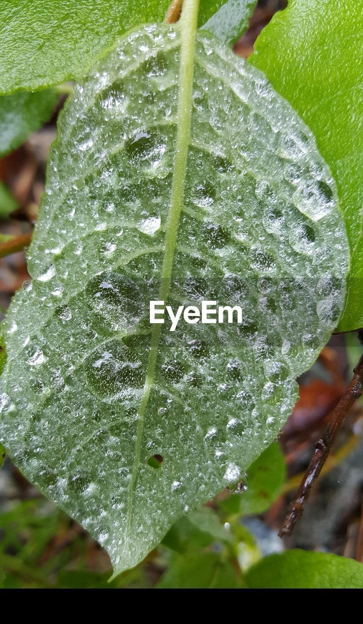 drop, leaf, water, wet, green color, nature, close-up, raindrop, freshness, droplet, beauty in nature, growth, weather, day, plant, fragility, outdoors, no people, purity