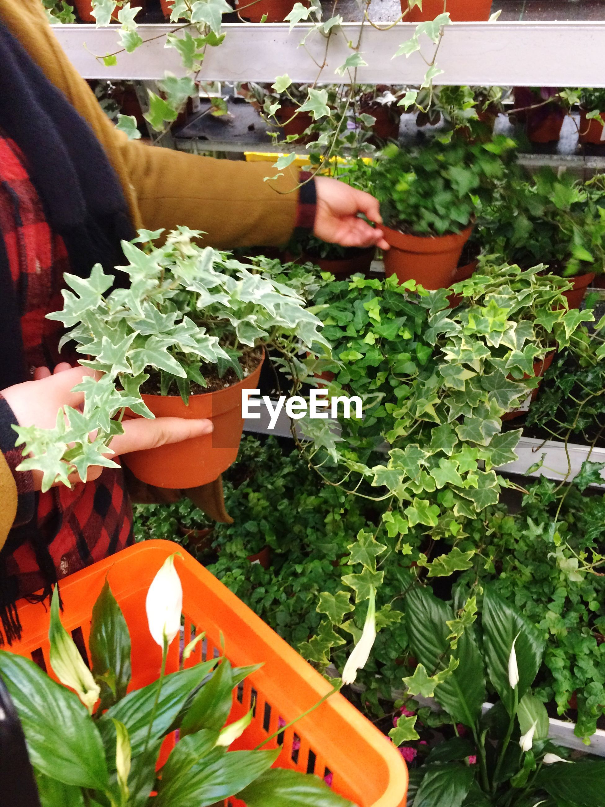 Midsection of woman buying potted plants
