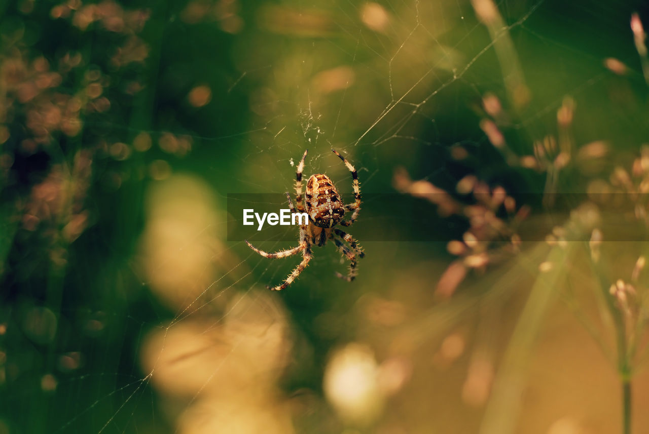 one animal, close-up, fragility, invertebrate, animals in the wild, animal themes, arachnid, selective focus, animal wildlife, animal, spider, insect, spider web, arthropod, vulnerability, nature, day, beauty in nature, no people, plant, outdoors, web, animal leg
