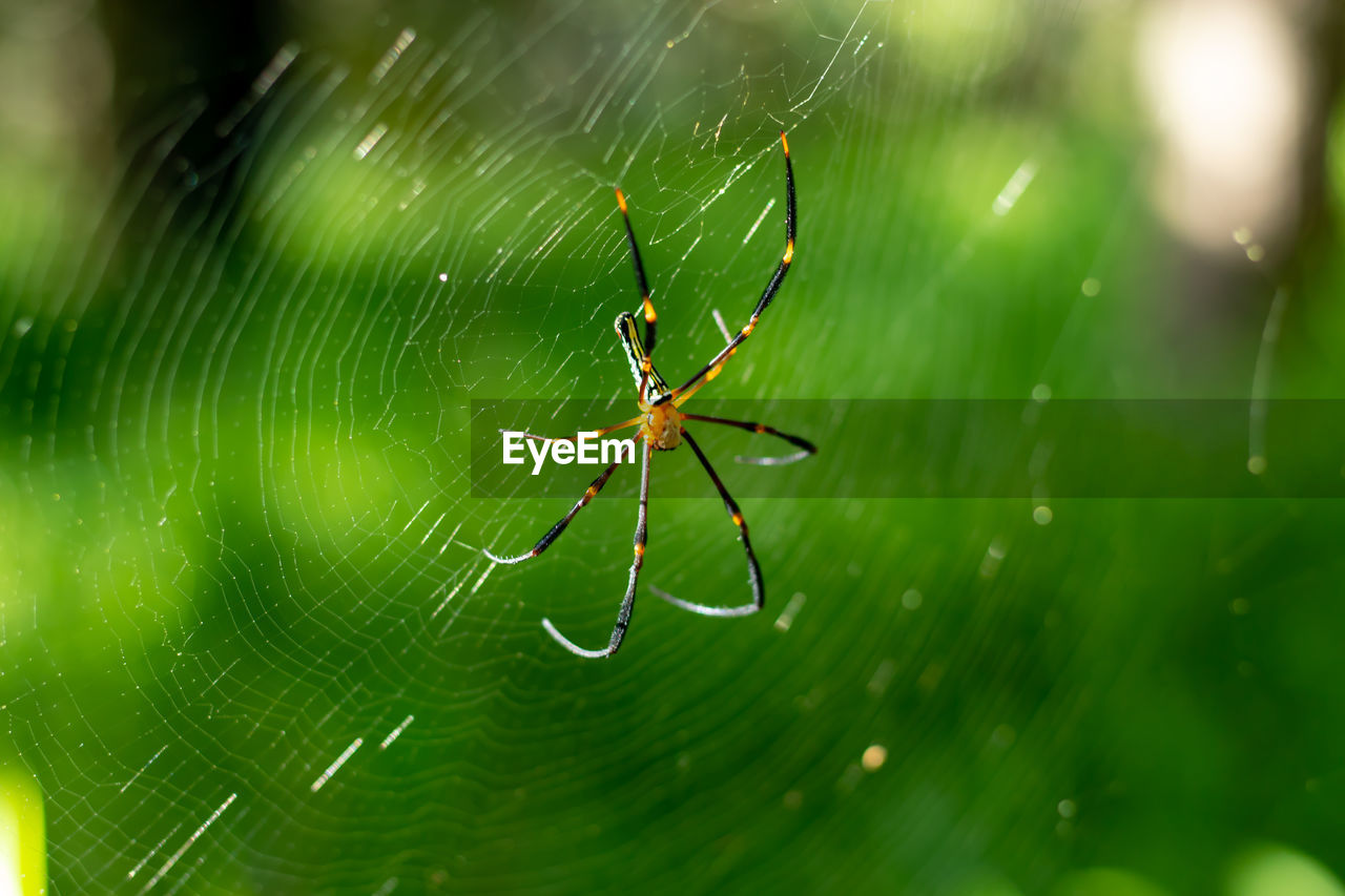 invertebrate, animal themes, animals in the wild, animal, insect, spider web, animal wildlife, spider, arachnid, one animal, arthropod, fragility, close-up, focus on foreground, nature, animal body part, day, selective focus, animal leg, web, no people, outdoors