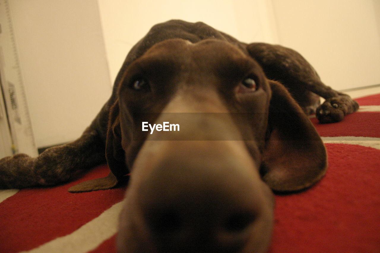 CLOSE-UP OF DOG IN BATHTUB