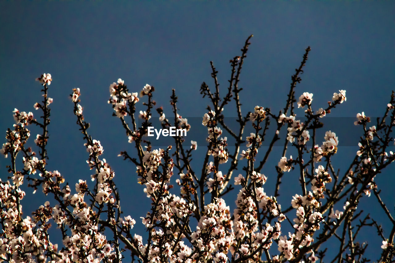 flower, growth, nature, fragility, blossom, beauty in nature, no people, plant, freshness, branch, low angle view, clear sky, springtime, day, outdoors, tree, close-up, sky
