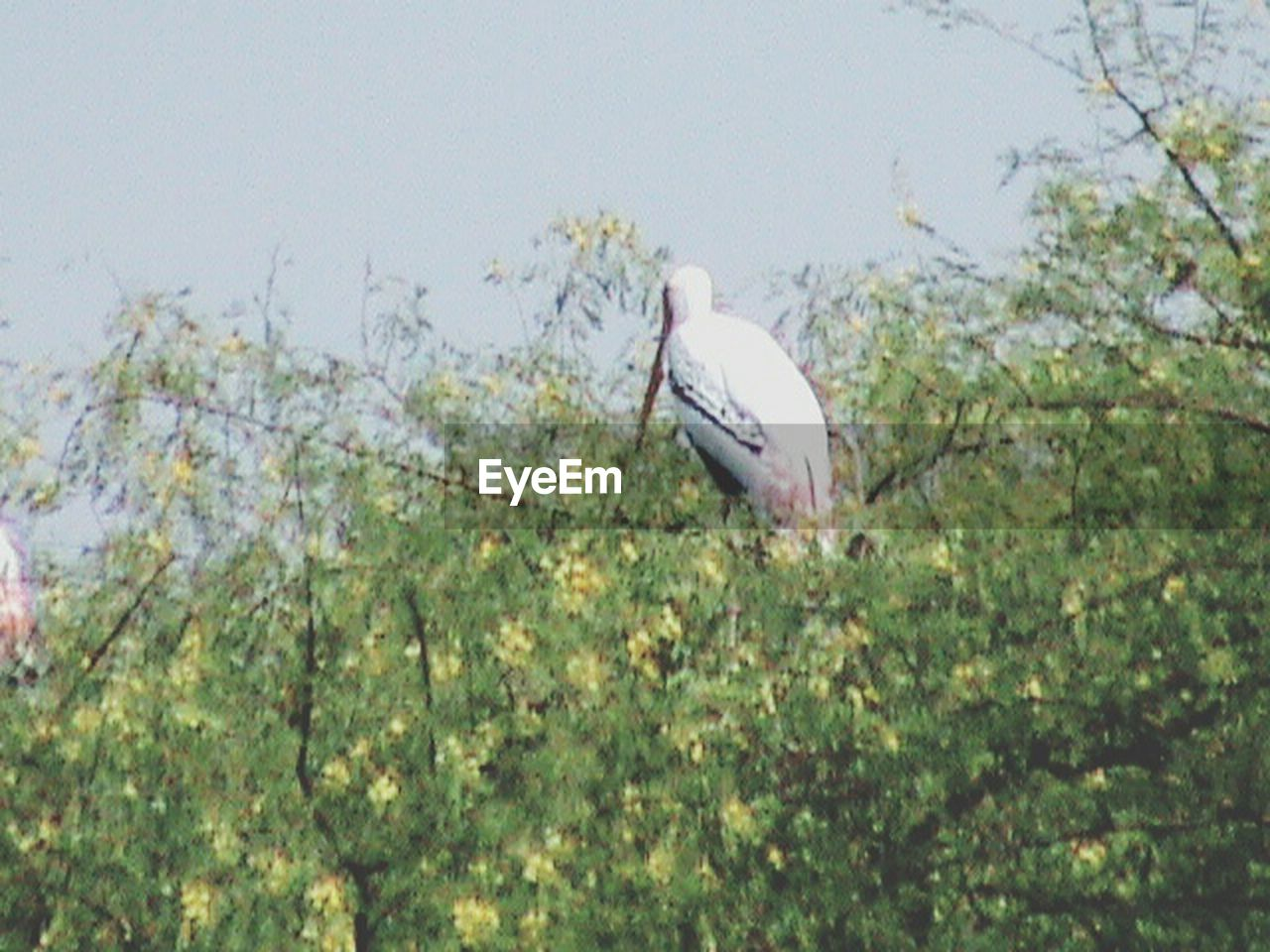 animal themes, one animal, bird, animals in the wild, nature, day, wildlife, animal wildlife, no people, perching, outdoors, stork, plant, tree, great egret, branch, beauty in nature, sky