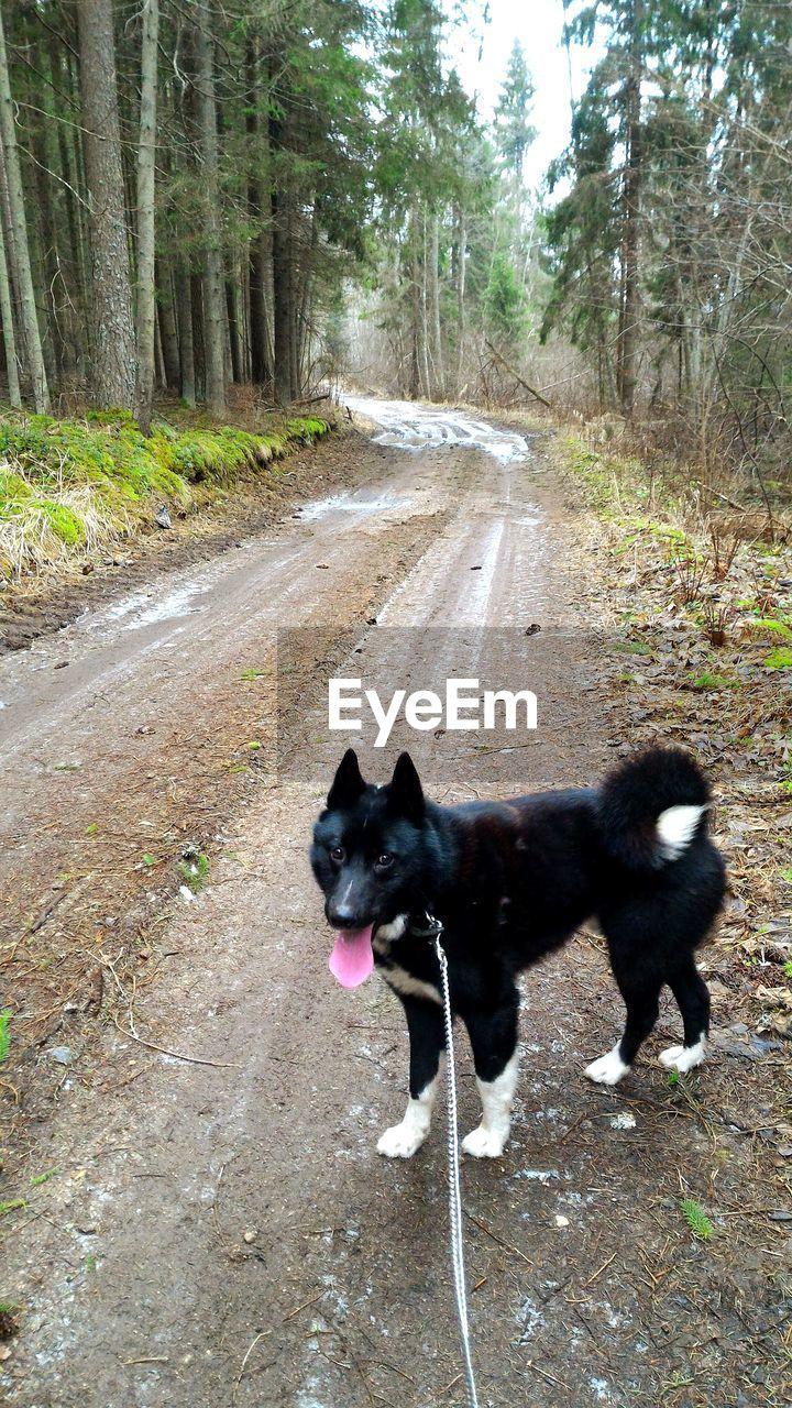 Black Dog Standing On Road