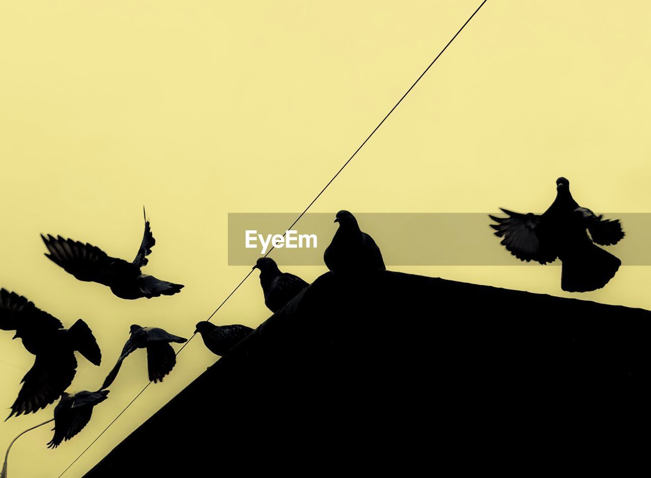 LOW ANGLE VIEW OF SILHOUETTE BIRDS PERCHING ON POWER LINES