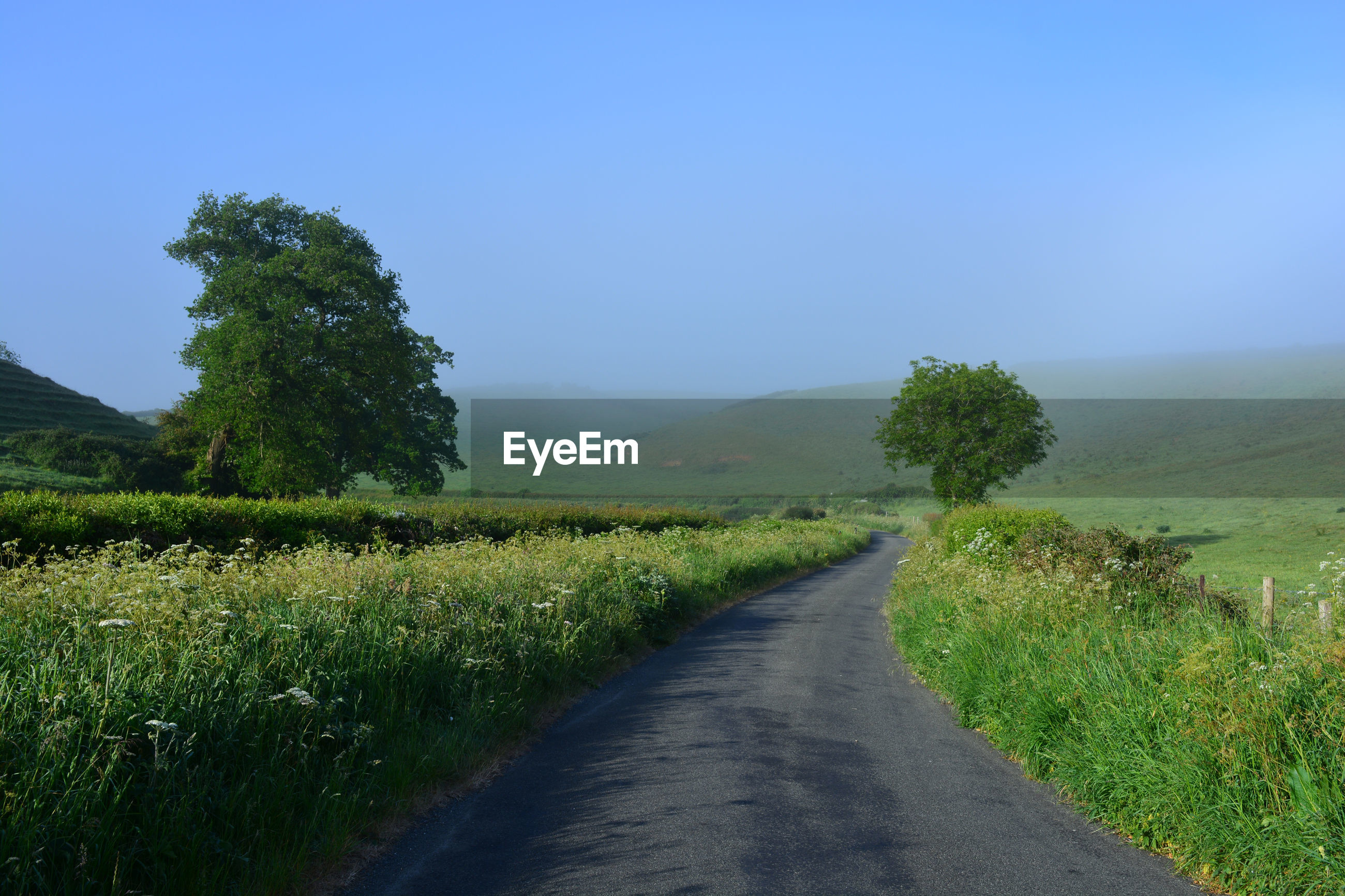 Misty country lane in late spring, between oborne and poyntington, sherborne, dorset, england
