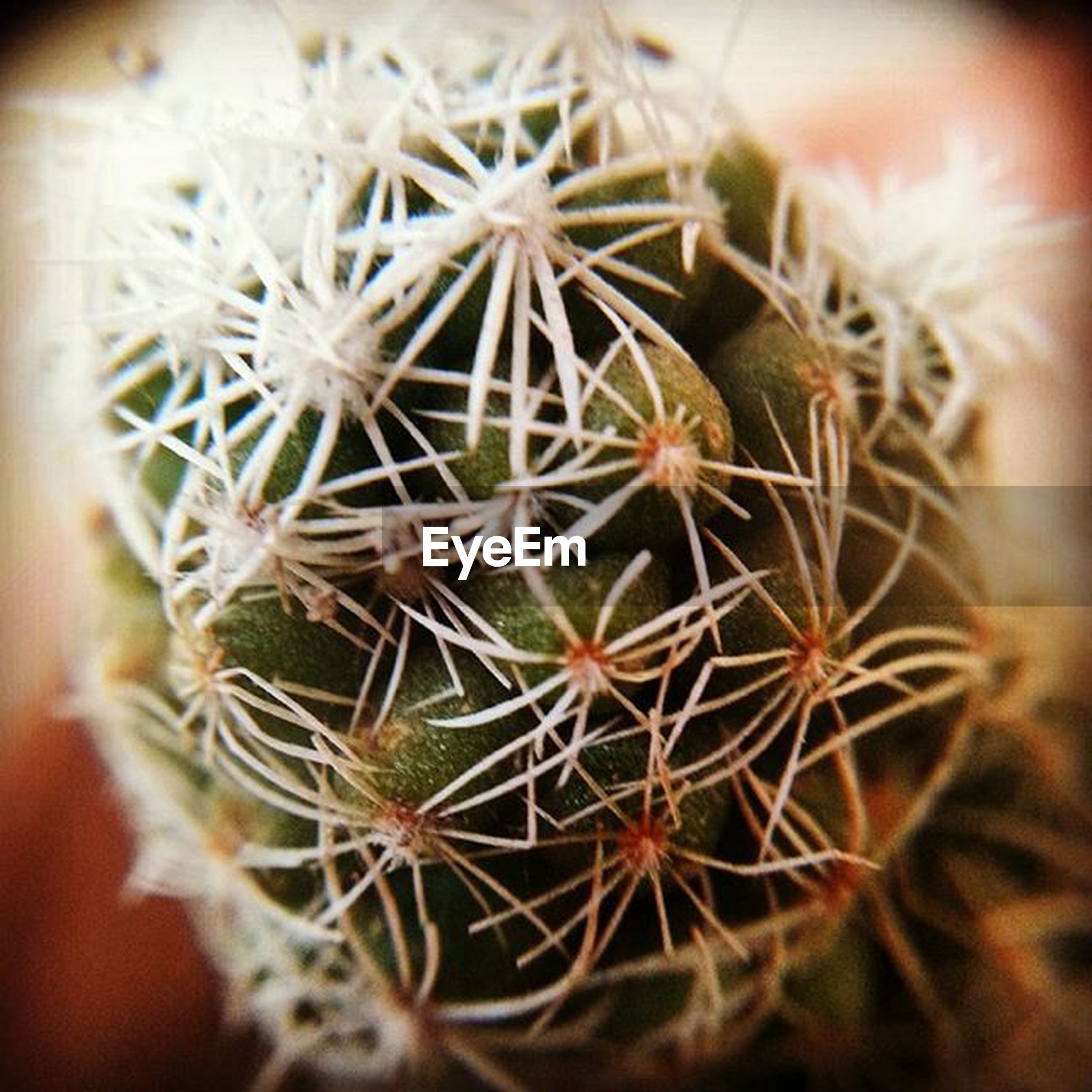 close-up, growth, focus on foreground, selective focus, plant, spiked, thorn, cactus, flower, fragility, nature, freshness, dandelion, seed, sharp, beauty in nature, dry, botany, stem, no people