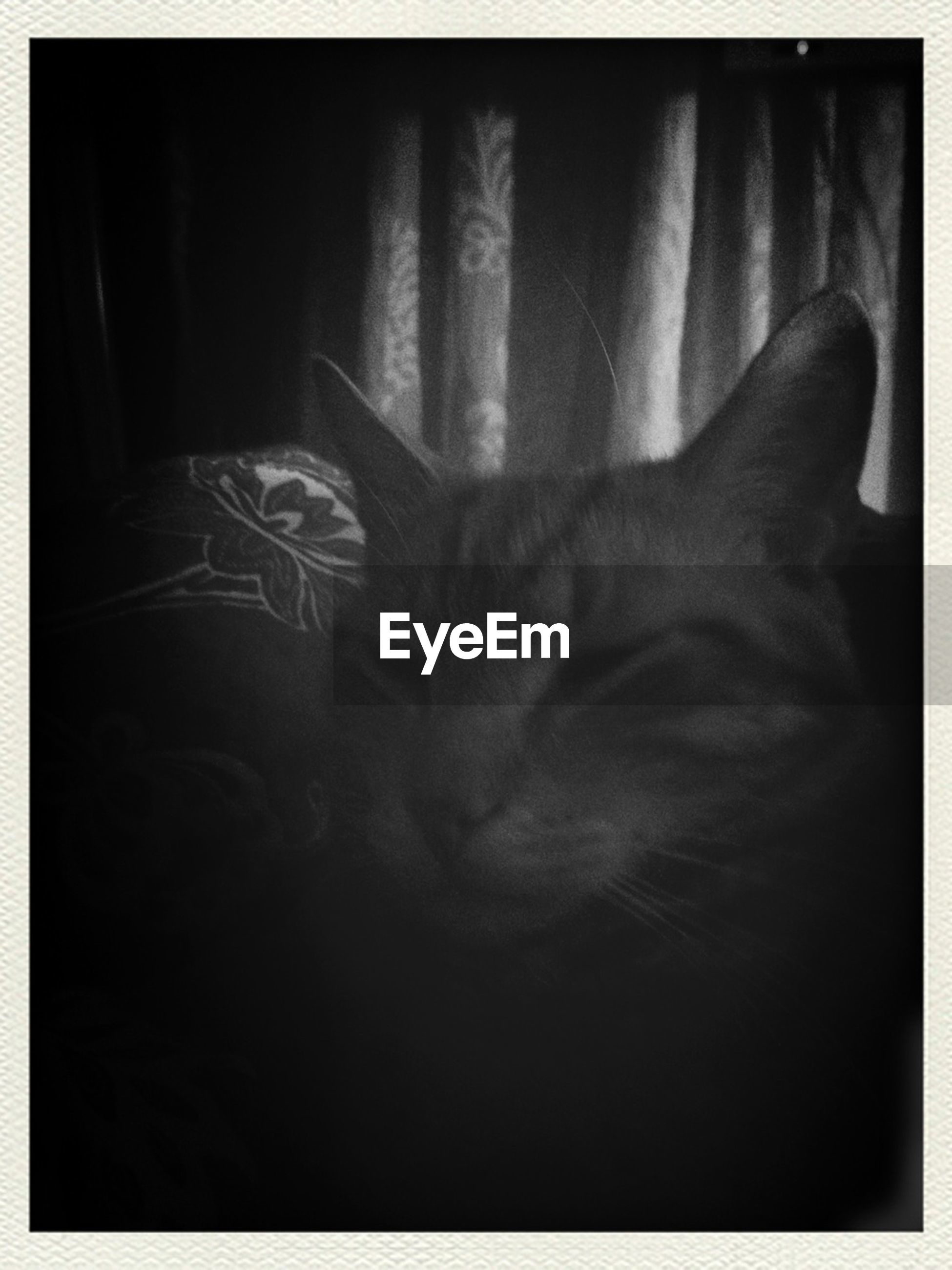 transfer print, indoors, auto post production filter, domestic cat, cat, pets, one animal, domestic animals, animal themes, feline, part of, mammal, relaxation, one person, close-up, sleeping, home interior, dark, whisker