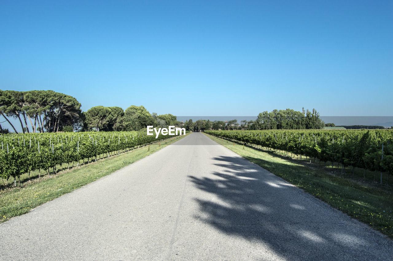 Road through vineyard