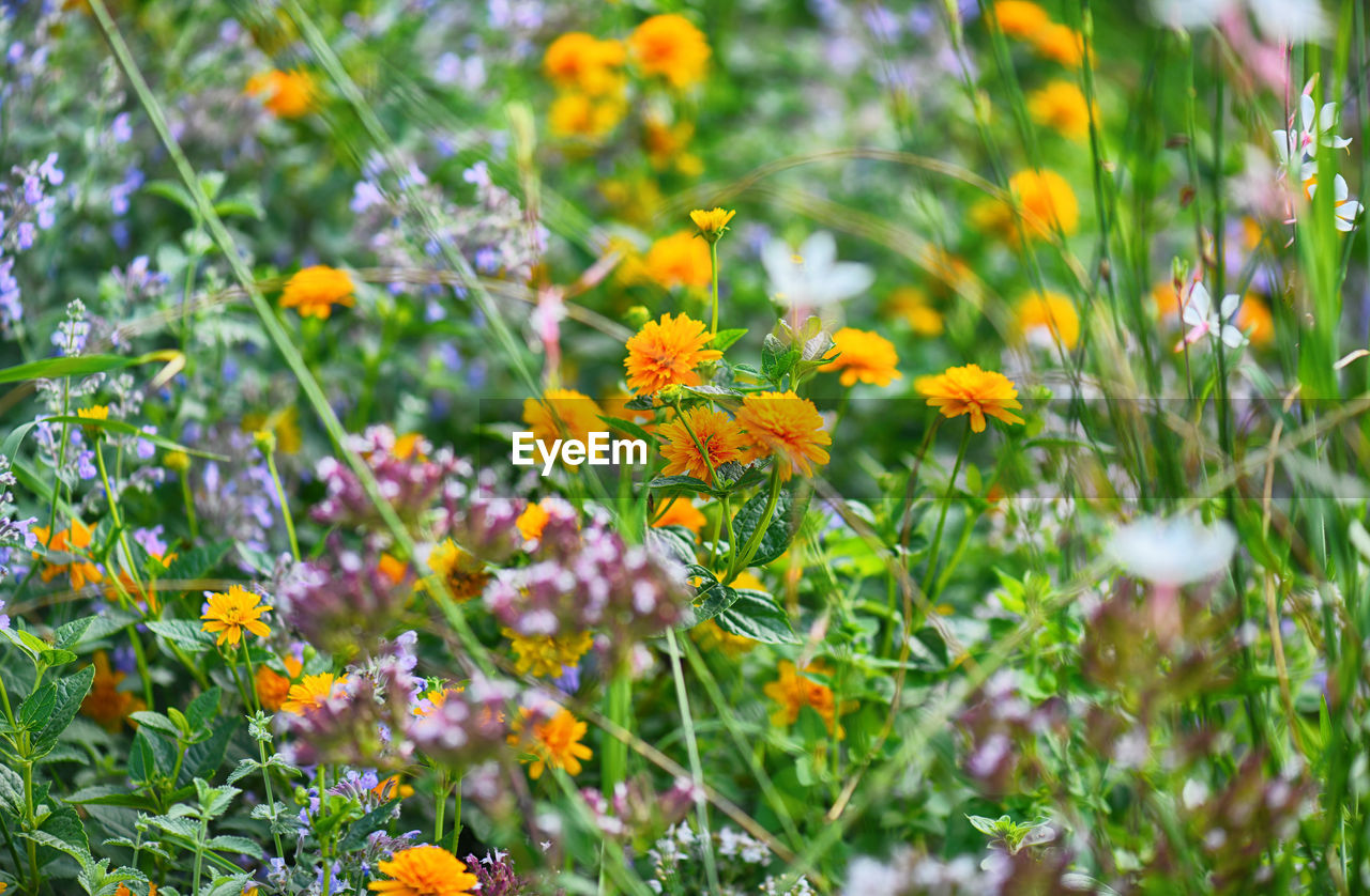 flowering plant, flower, plant, fragility, beauty in nature, vulnerability, freshness, growth, petal, yellow, flower head, selective focus, nature, close-up, green color, day, inflorescence, no people, field, land, outdoors, pollination