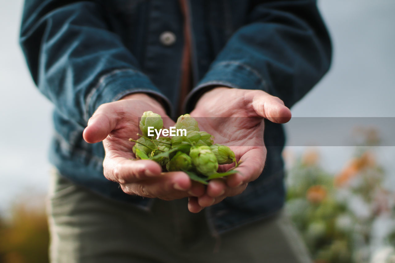 one person, holding, midsection, human hand, hand, human body part, real people, focus on foreground, freshness, men, food and drink, food, lifestyles, green color, healthy eating, casual clothing, plant, nature, wellbeing, outdoors, hands cupped, finger, human limb