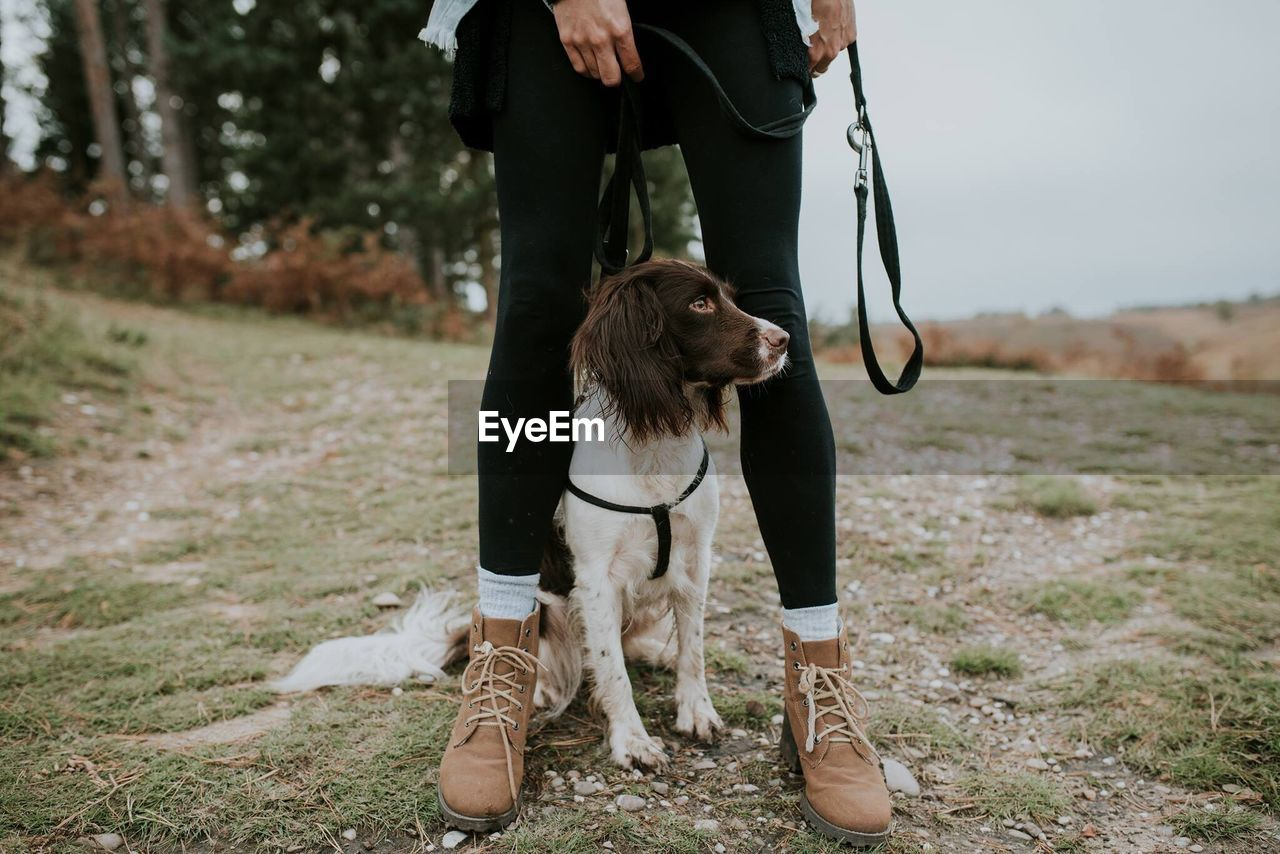 dog, one animal, pets, domestic animals, mammal, low section, real people, pet leash, one person, standing, dog lead, human leg, day, outdoors, men, nature, human body part, human hand, people
