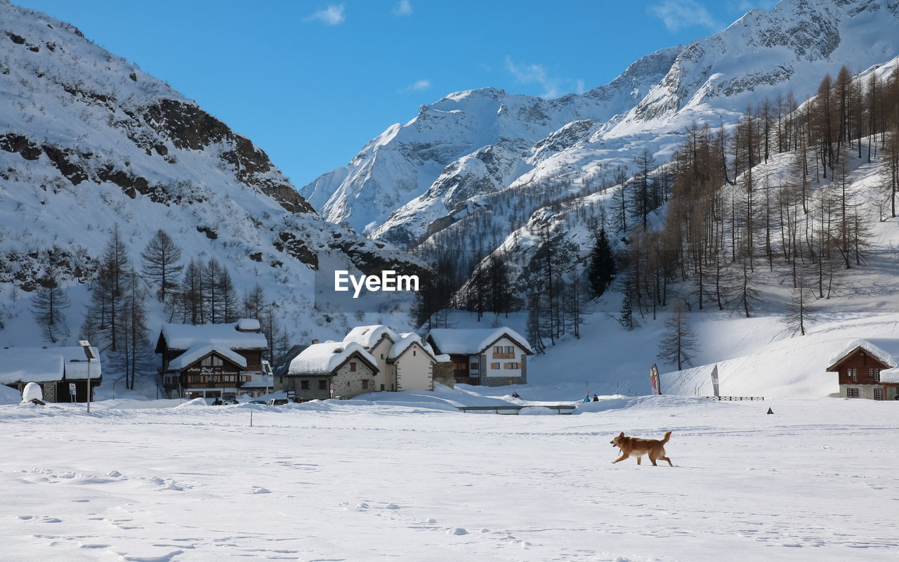 snow, winter, cold temperature, mountain, weather, nature, scenics, tranquil scene, white color, outdoors, beauty in nature, built structure, field, landscape, tranquility, architecture, snowcapped mountain, non-urban scene, mountain range, day, building exterior, no people, sky, animal themes, mammal, snowdrift