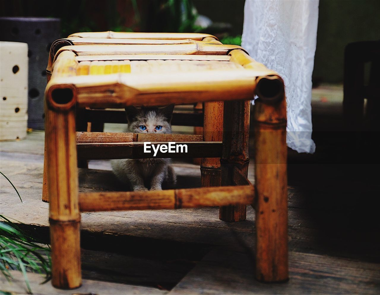 Portrait of cat sitting in stool