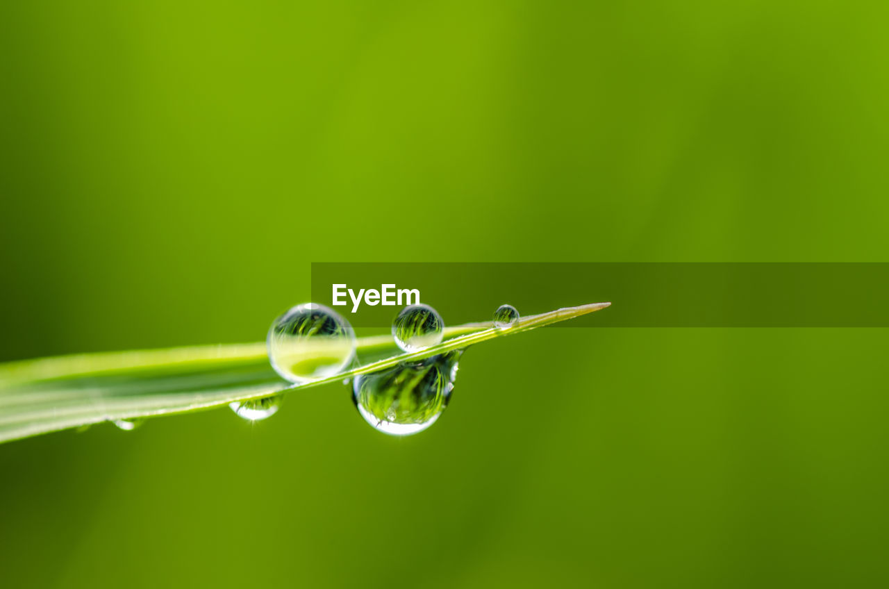 green color, drop, water, plant, close-up, beauty in nature, nature, no people, blade of grass, grass, wet, plant part, selective focus, growth, leaf, copy space, focus on foreground, fragility, vulnerability, outdoors, purity, dew